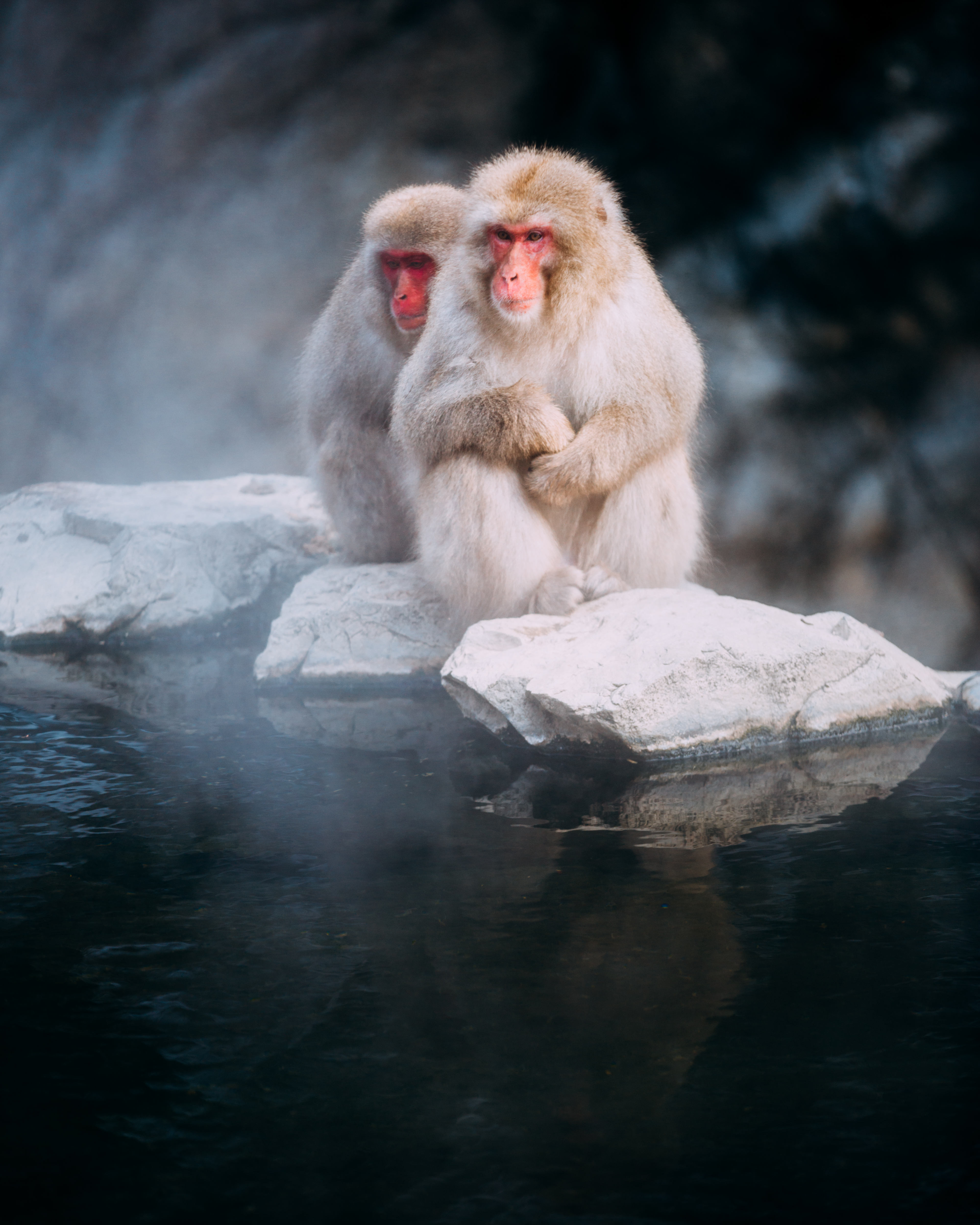 147289 Screensavers and Wallpapers Monkeys for phone. Download Animals, Stones, Monkeys, Fog, Macaque, Macaques pictures for free