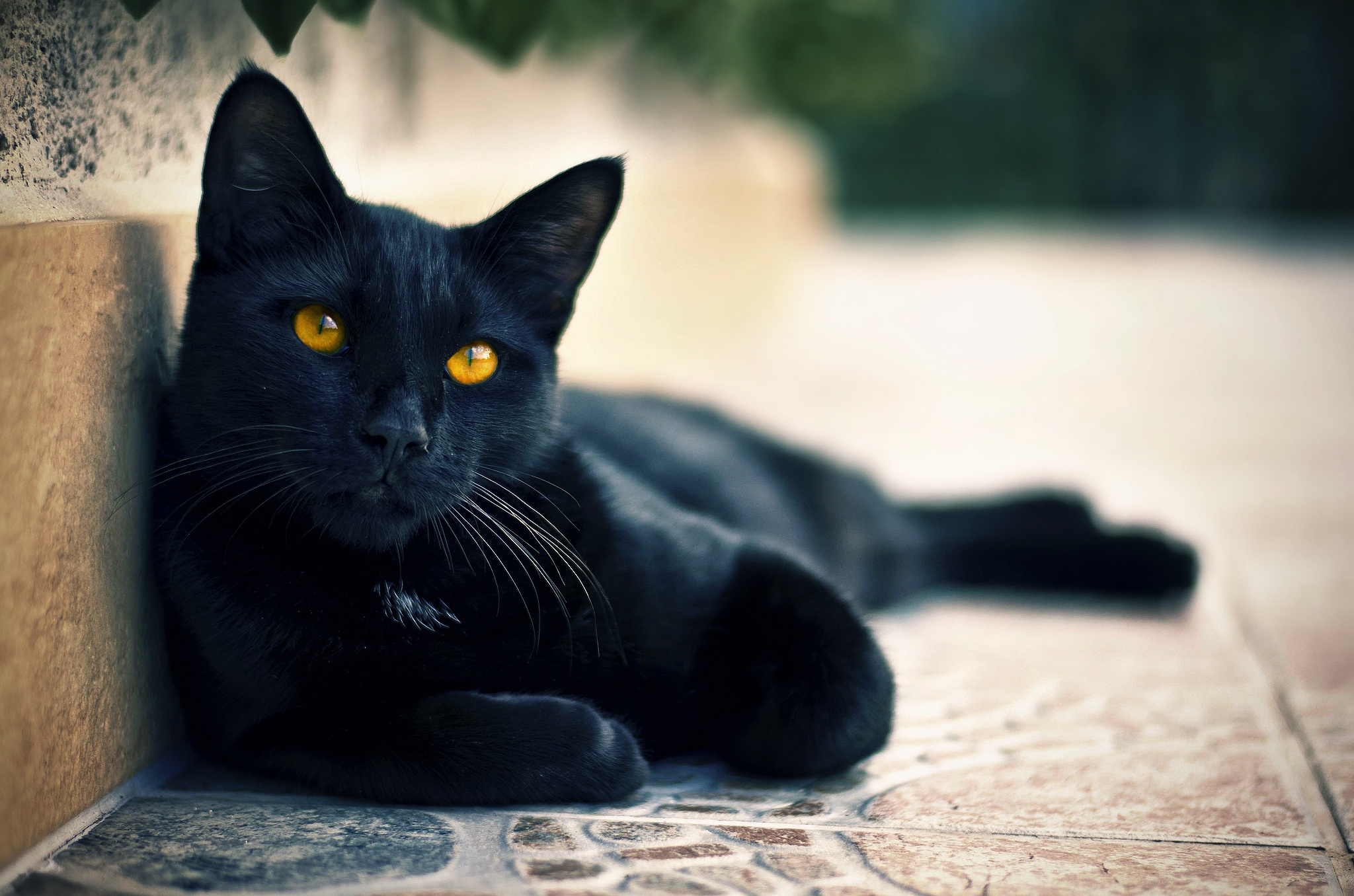 151030 download wallpaper Animals, Black Cat, To Lie Down, Lie, Muzzle, Sight, Opinion screensavers and pictures for free