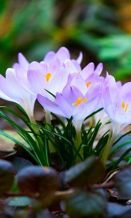 44545 télécharger le fond d'écran Plantes, Fleurs - économiseurs d'écran et images gratuitement