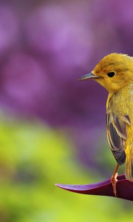 19833 download wallpaper Animals, Birds, Violet screensavers and pictures for free