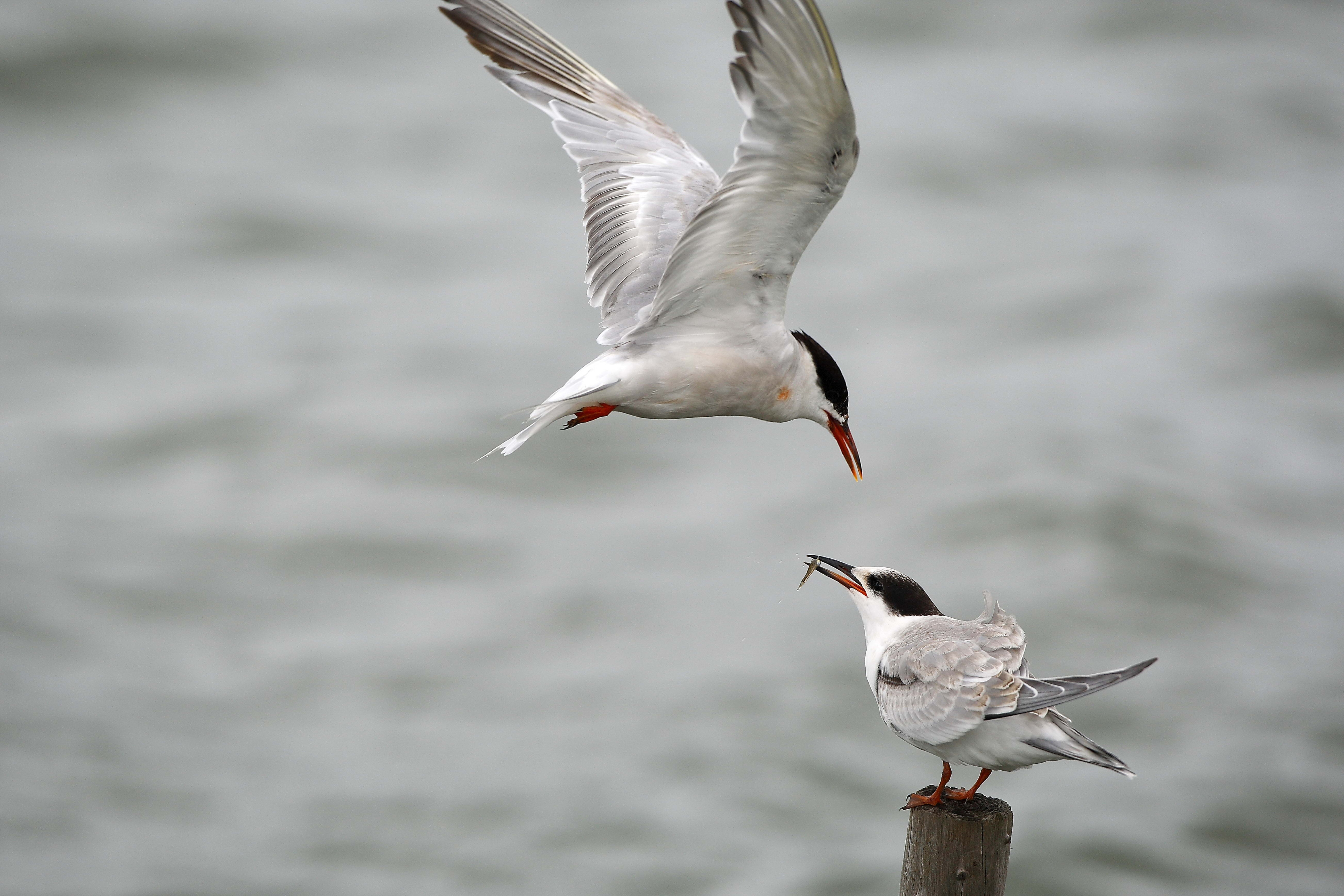 101350 download wallpaper Animals, Gull, Seagull, Mining, Bird screensavers and pictures for free
