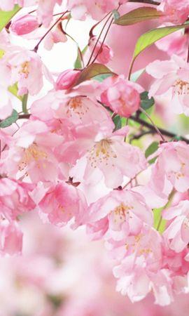 14635 скачать обои Растения, Цветы, Фон - заставки и картинки бесплатно