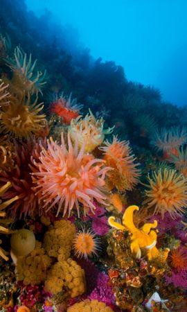 28549 скачать обои Пейзаж, Море, Кораллы - заставки и картинки бесплатно