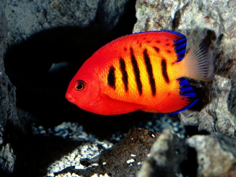 40321 download wallpaper Animals, Fishes screensavers and pictures for free
