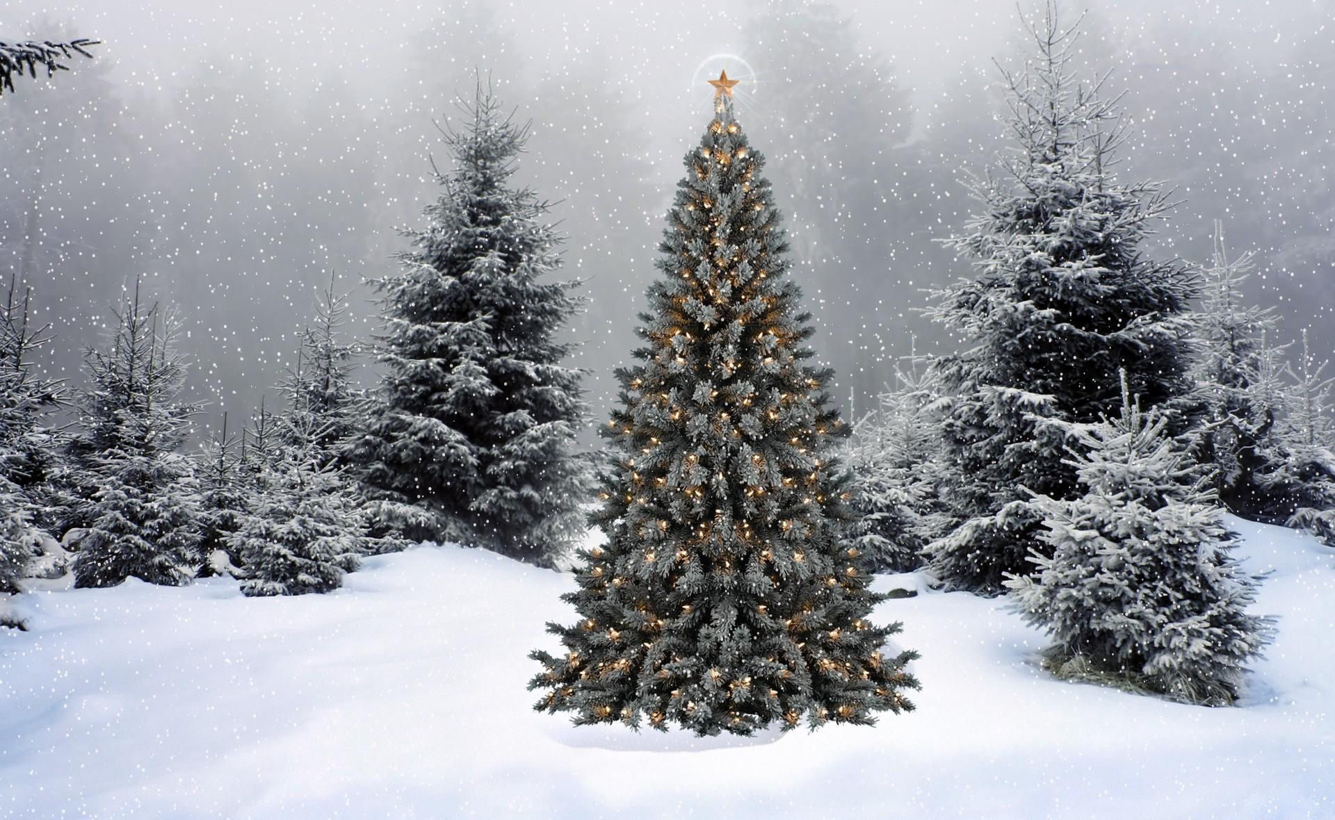 129884 скачать обои Праздники, Гирлянды, Звезда, Снег, Зима, Лес, Новый Год, Рождество, Елки - заставки и картинки бесплатно
