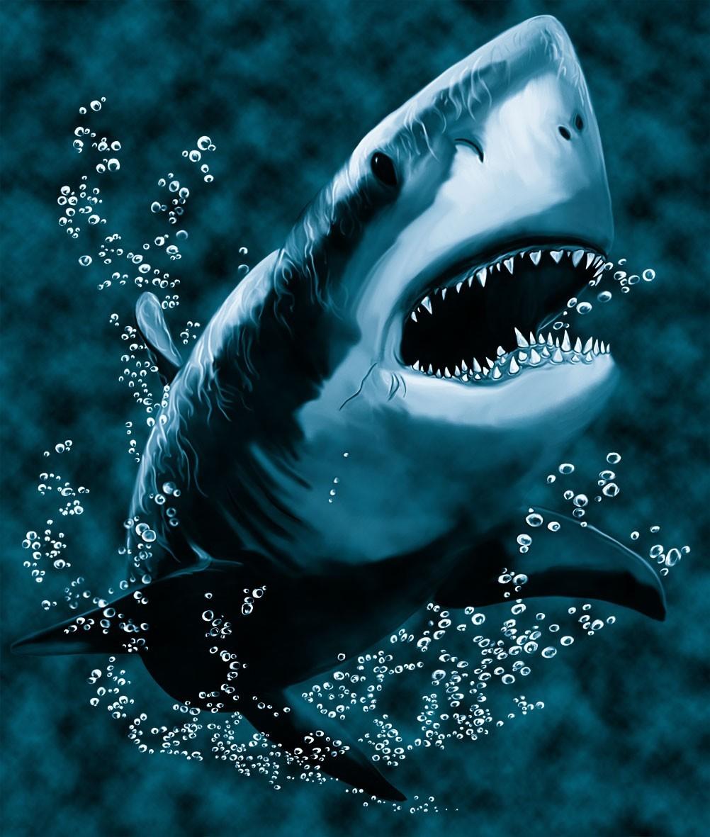 18943 Заставки и Обои Рыбы на телефон. Скачать Рыбы, Акулы, Животные, Море, Рисунки картинки бесплатно