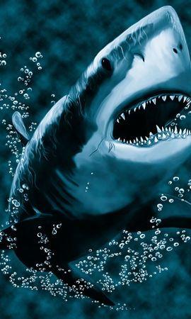 18943 baixar papel de parede Animais, Mar, Sharks, Peixes, Imagens - protetores de tela e imagens gratuitamente