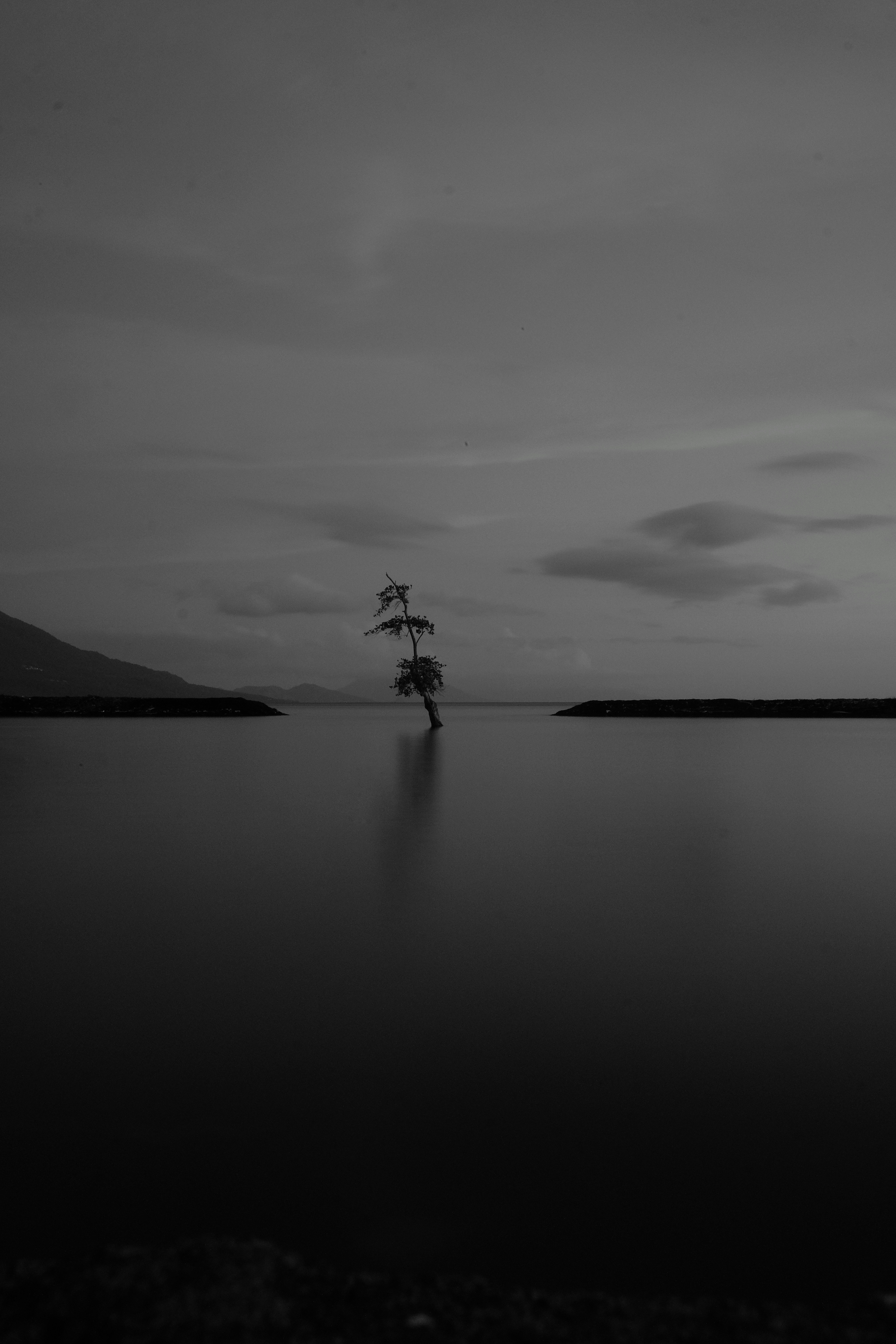 85708 download wallpaper Minimalism, Lake, Dark, Wood, Tree, Bw, Chb, Gloomy, Lonely screensavers and pictures for free