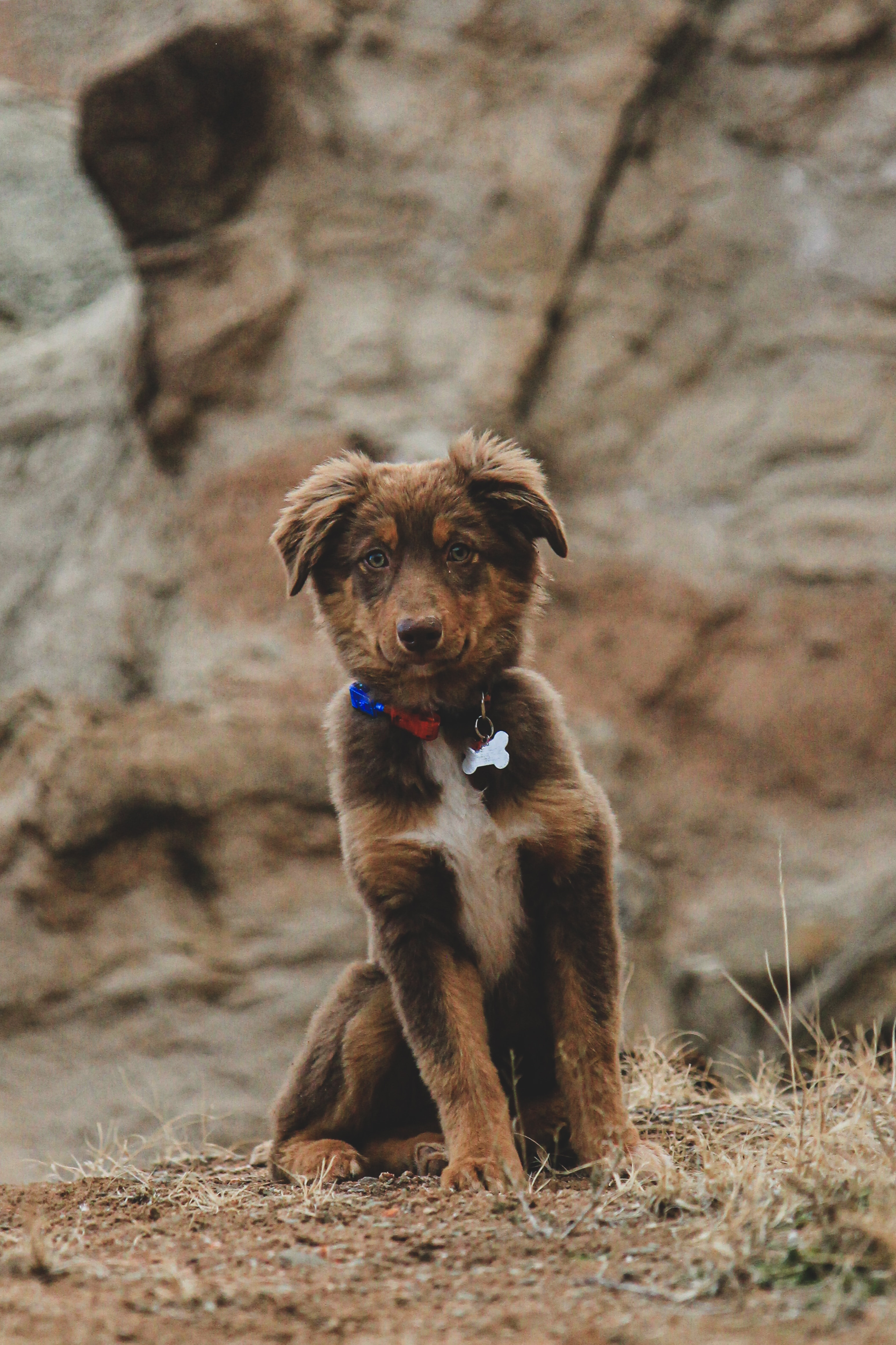 126217 download wallpaper Animals, Dog, Puppy, Nice, Sweetheart, Pet, Brown screensavers and pictures for free