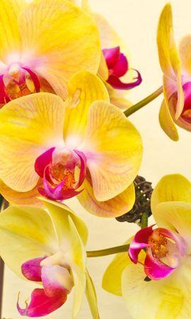 19187 descargar fondo de pantalla Plantas, Flores: protectores de pantalla e imágenes gratis