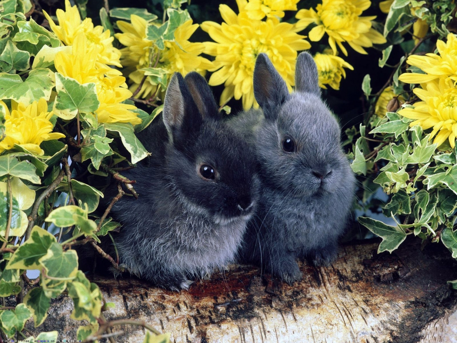 8825 Screensavers and Wallpapers Rabbits for phone. Download Animals, Rabbits pictures for free