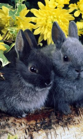 8825 download wallpaper Animals, Rabbits screensavers and pictures for free
