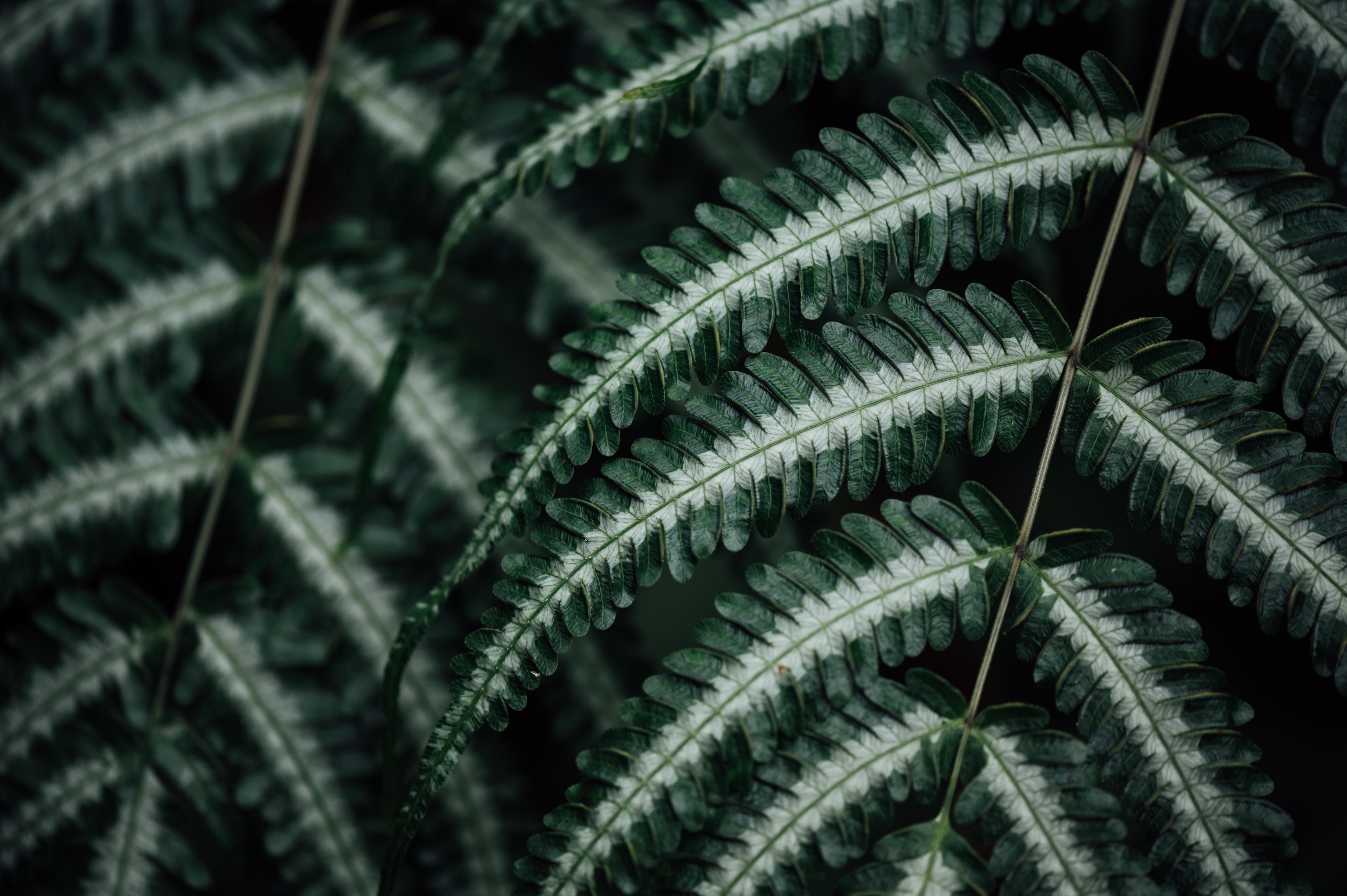 78894 скачать обои Макро, Папоротник, Растение, Листья - заставки и картинки бесплатно
