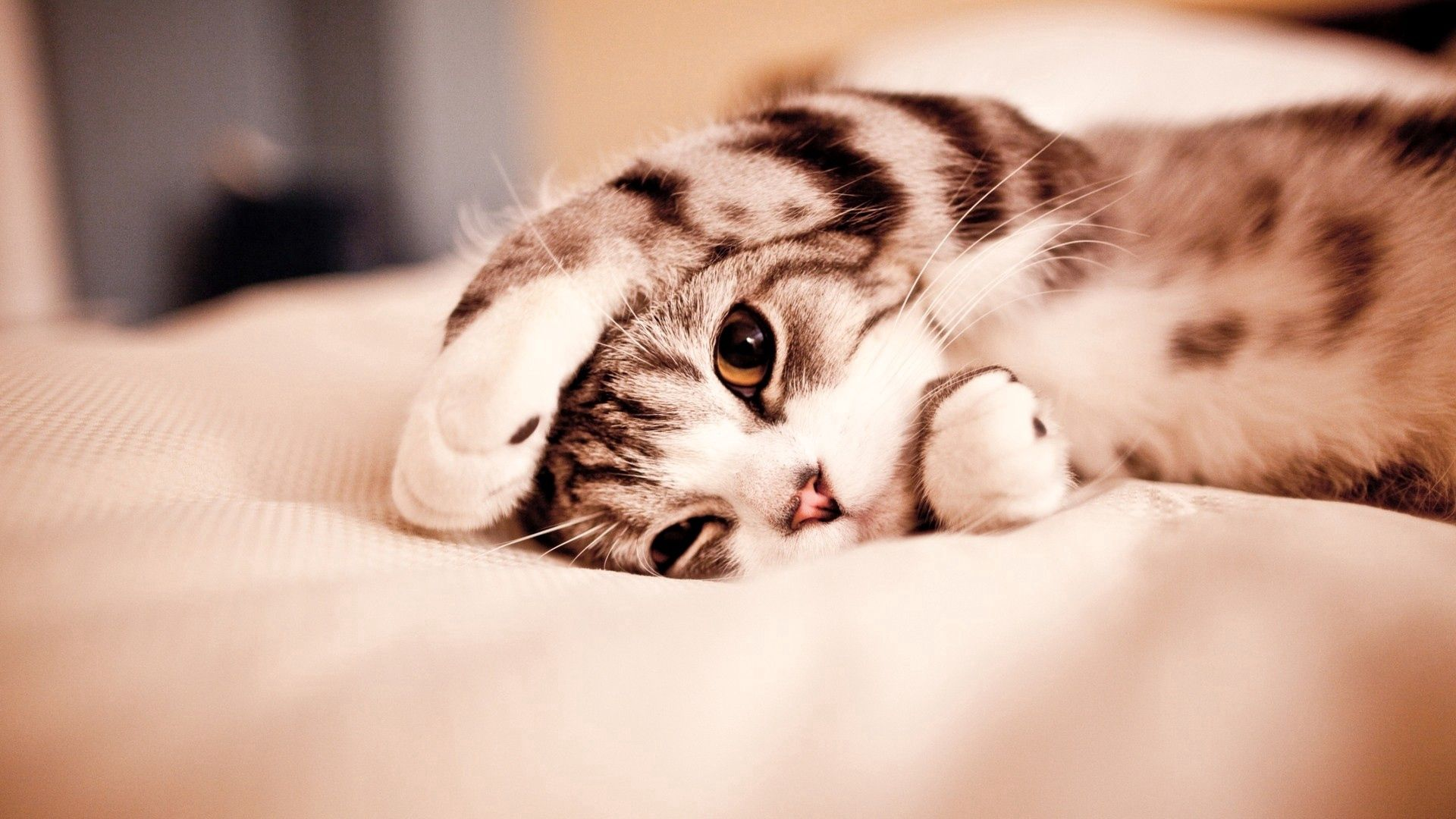 87292 download wallpaper Animals, Cat, Paw, To Lie Down, Lie, Playful screensavers and pictures for free