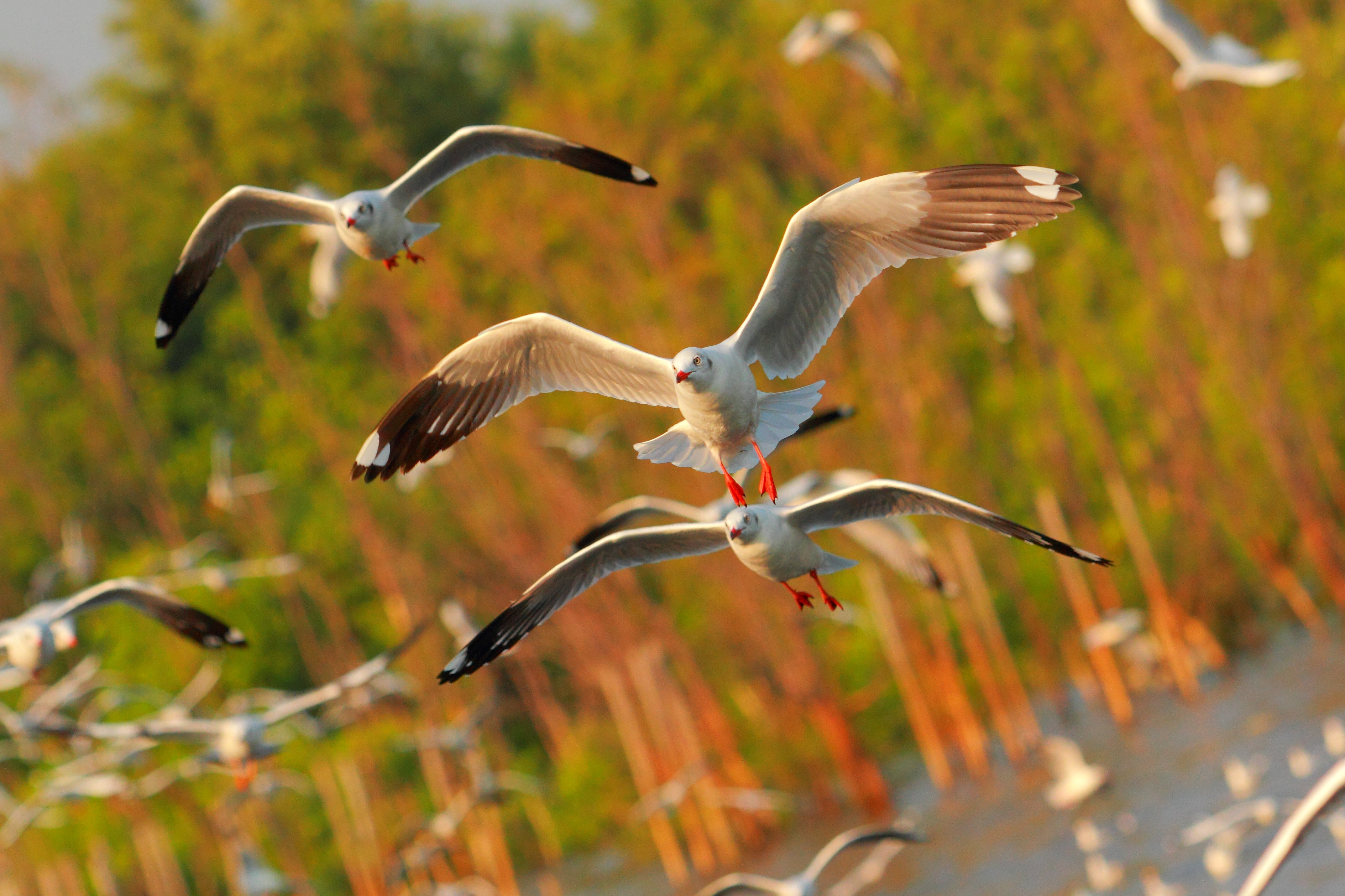 100079 download wallpaper Nature, Flight, Sea, Birds, Seagulls screensavers and pictures for free