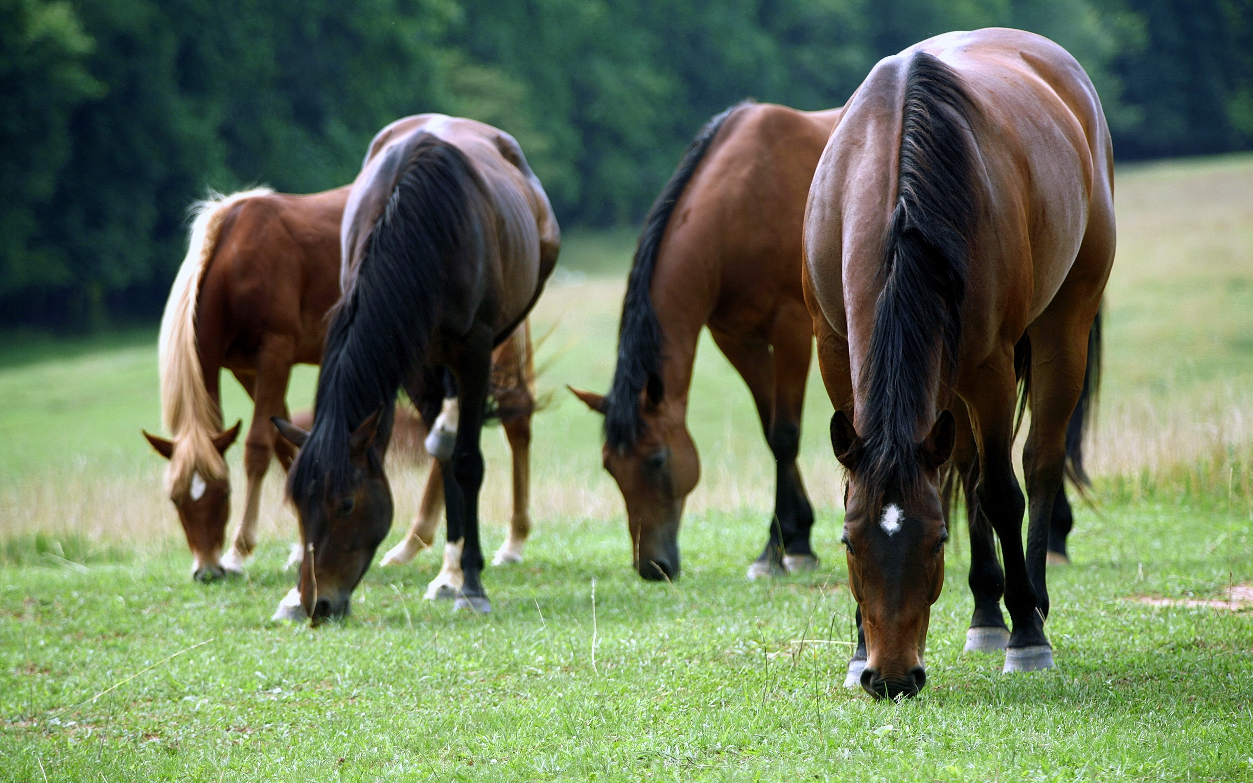 48469 download wallpaper Animals, Horses screensavers and pictures for free