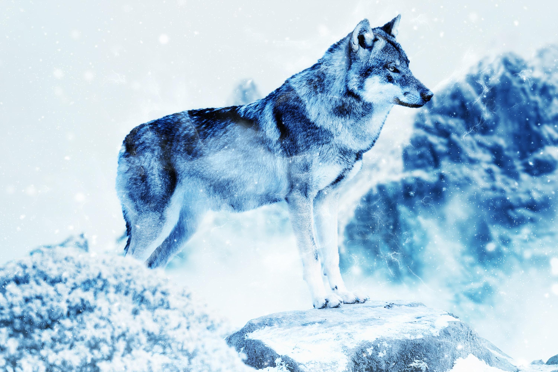 83388 Hintergrundbild herunterladen Tiere, Kunst, Raubtier, Predator, Wolf, Photoshop - Bildschirmschoner und Bilder kostenlos