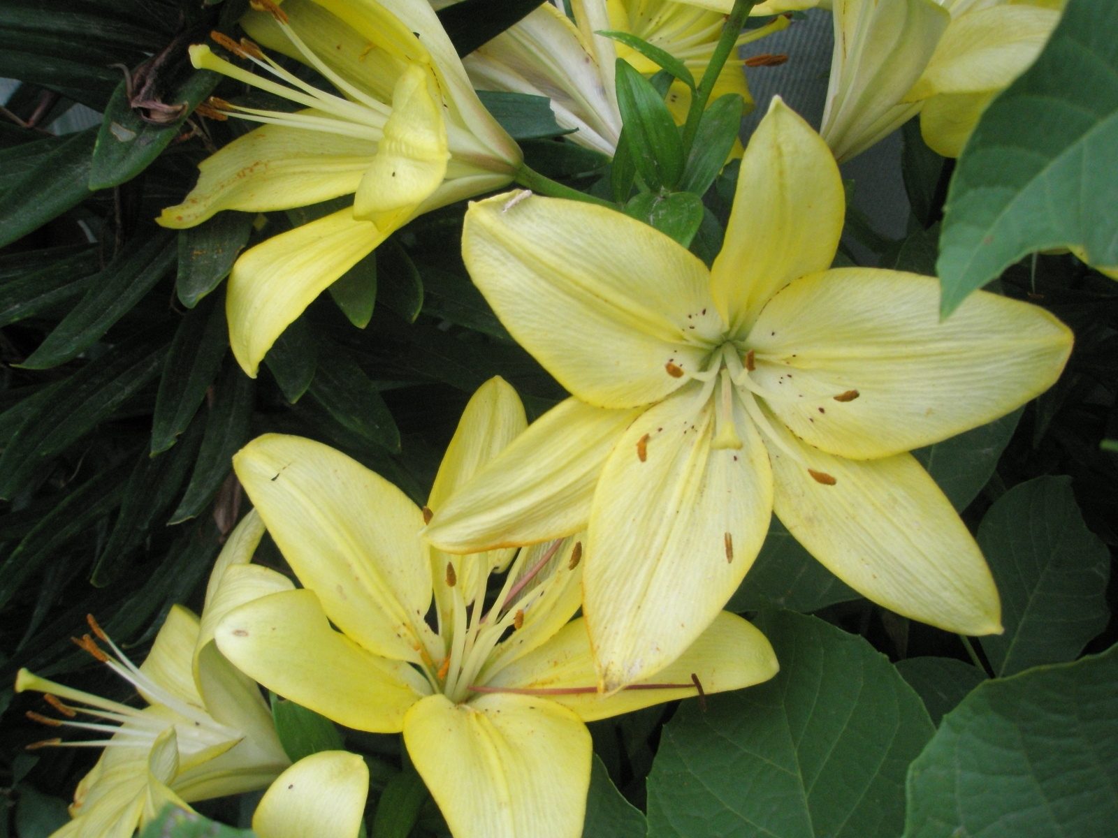 7796 скачать обои Растения, Цветы - заставки и картинки бесплатно