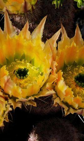 26399 скачать обои Растения, Цветы - заставки и картинки бесплатно