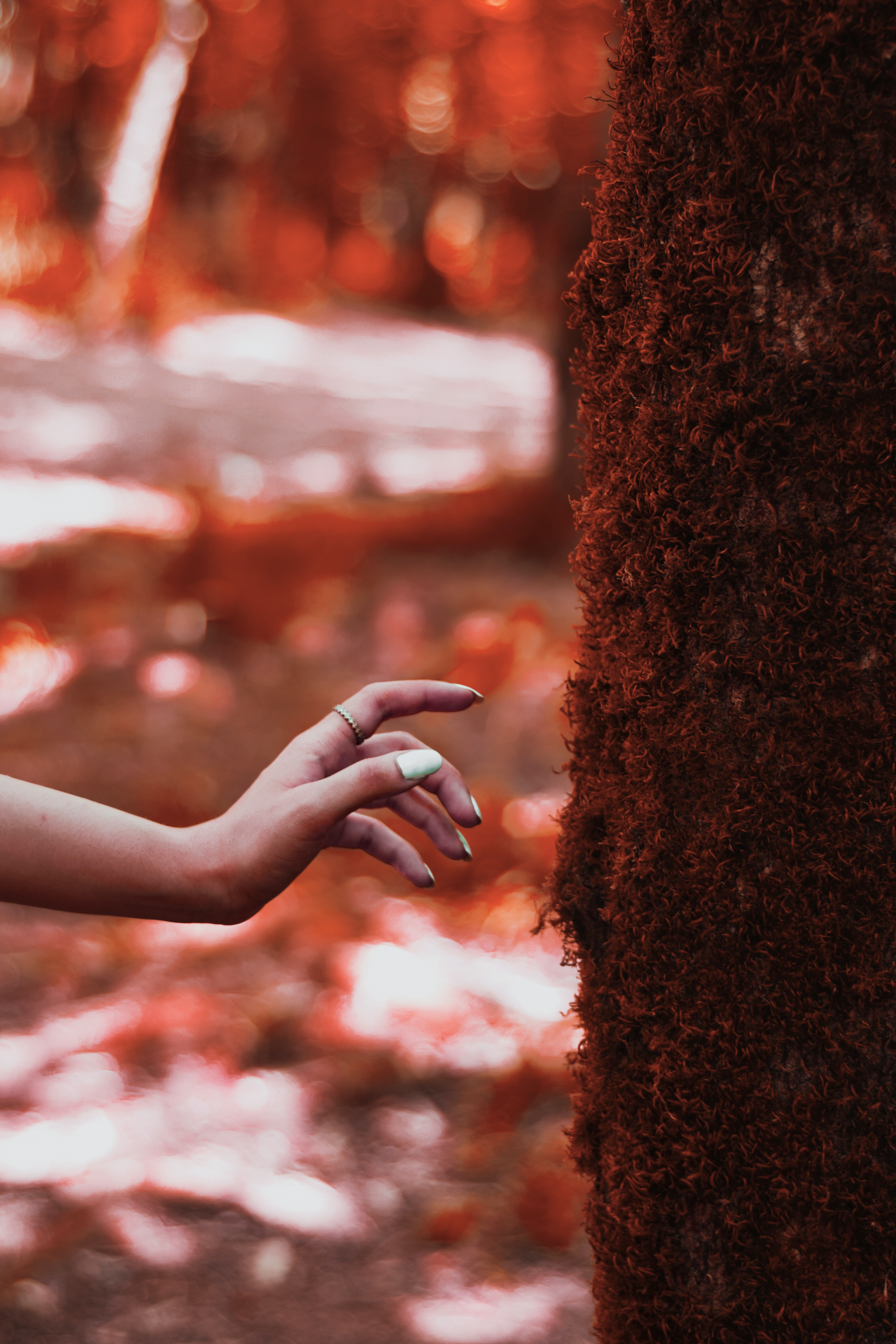 126205 Screensavers and Wallpapers Hand for phone. Download Miscellanea, Miscellaneous, Hand, Wood, Tree, Moss, Touching, Touch pictures for free