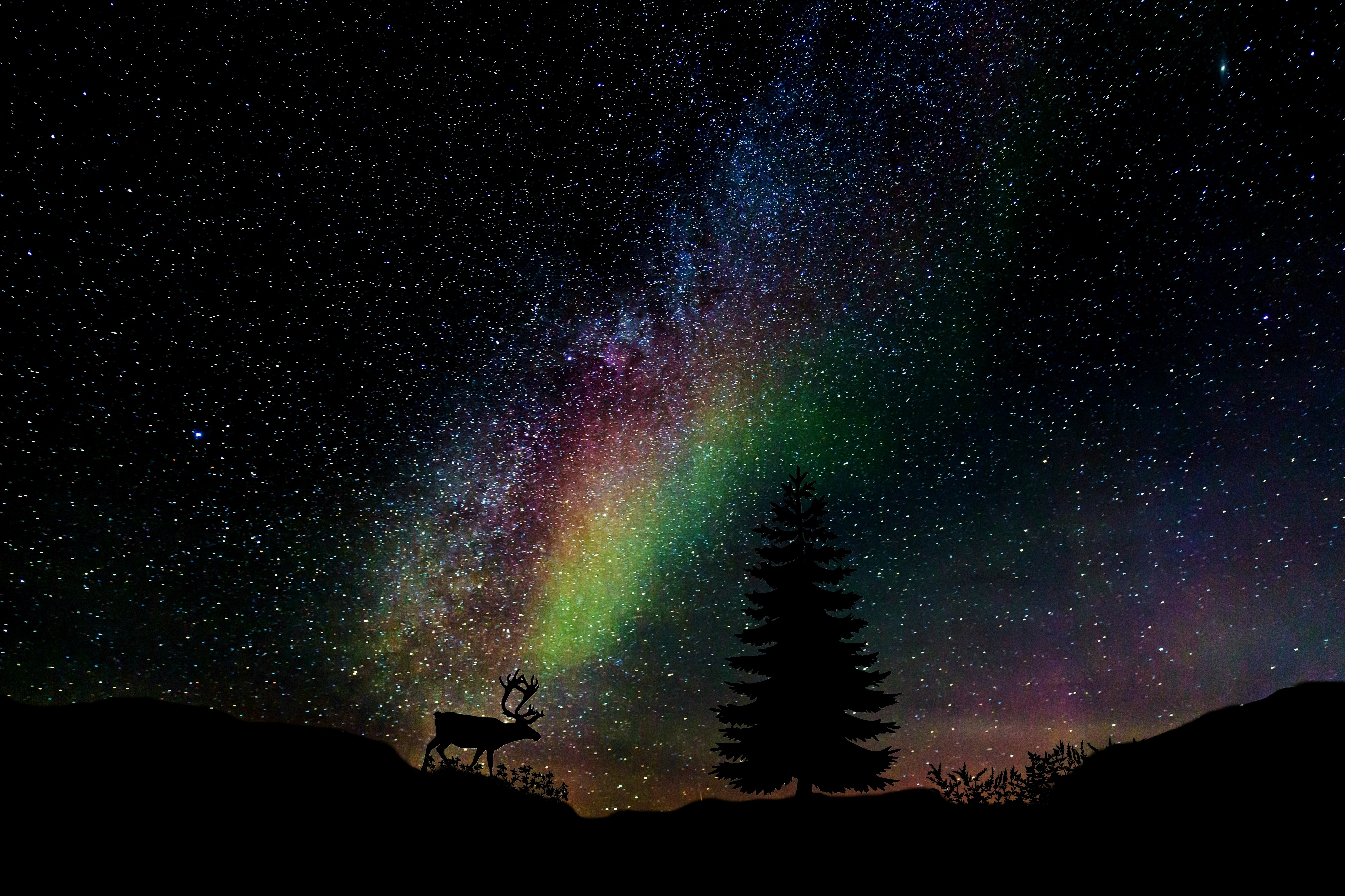 97862 download wallpaper Nature, Starry Sky, Spruce, Fir, Deer, Photoshop screensavers and pictures for free
