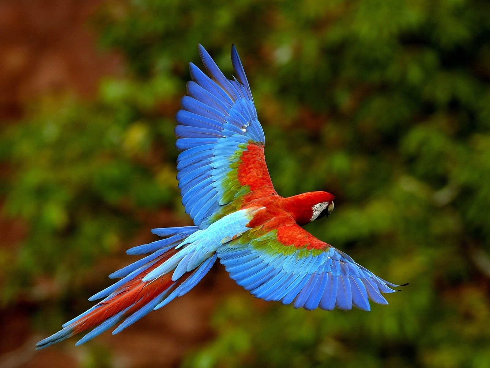 3540 download wallpaper Animals, Birds, Parrots screensavers and pictures for free