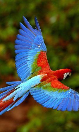 3540 baixar papel de parede Animais, Aves, Papagaios - protetores de tela e imagens gratuitamente