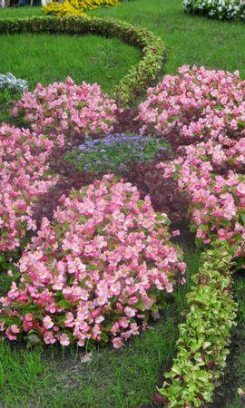 2094 descargar fondo de pantalla Plantas, Flores: protectores de pantalla e imágenes gratis