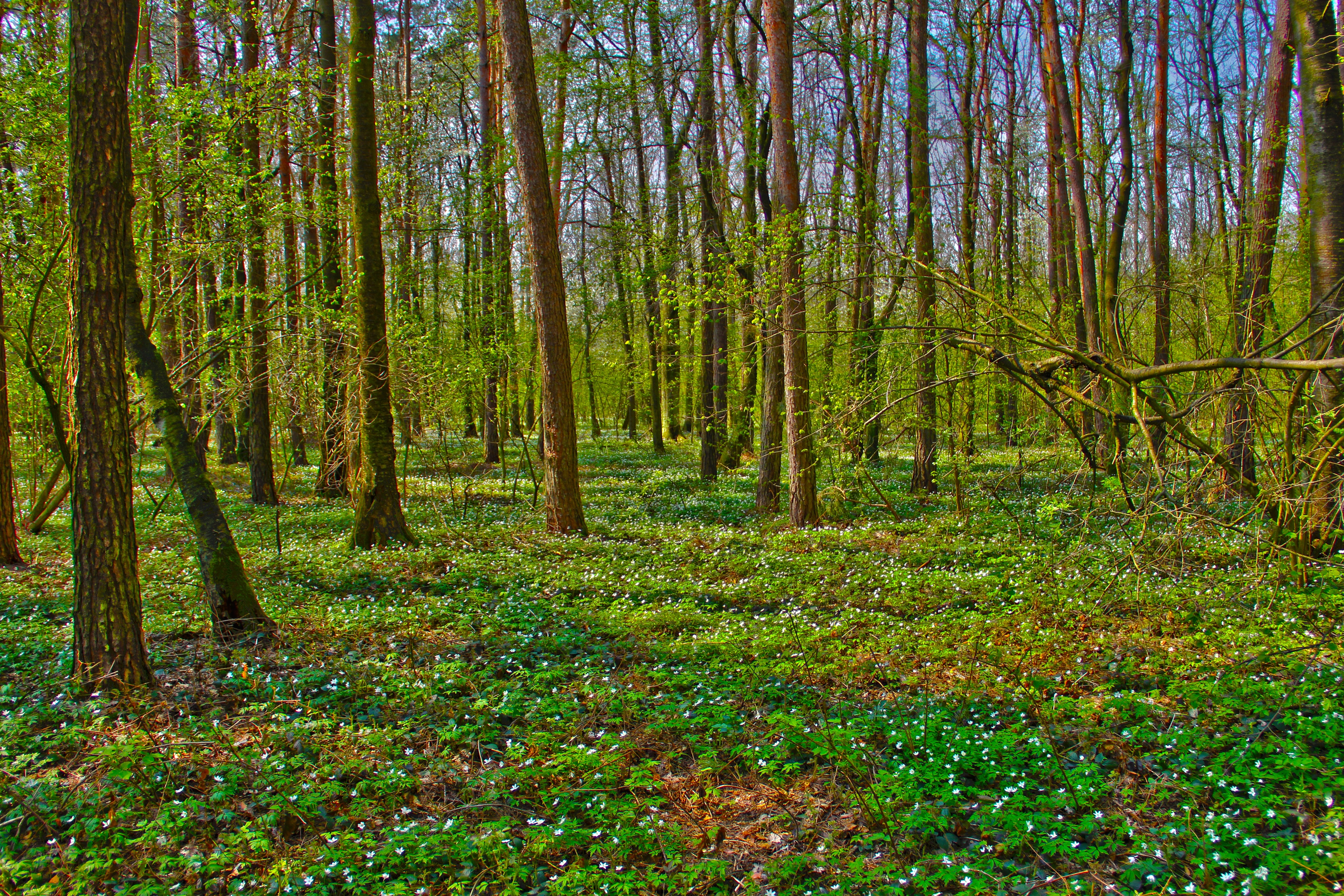 149071 download wallpaper Nature, Forest, Trees, Landscape screensavers and pictures for free
