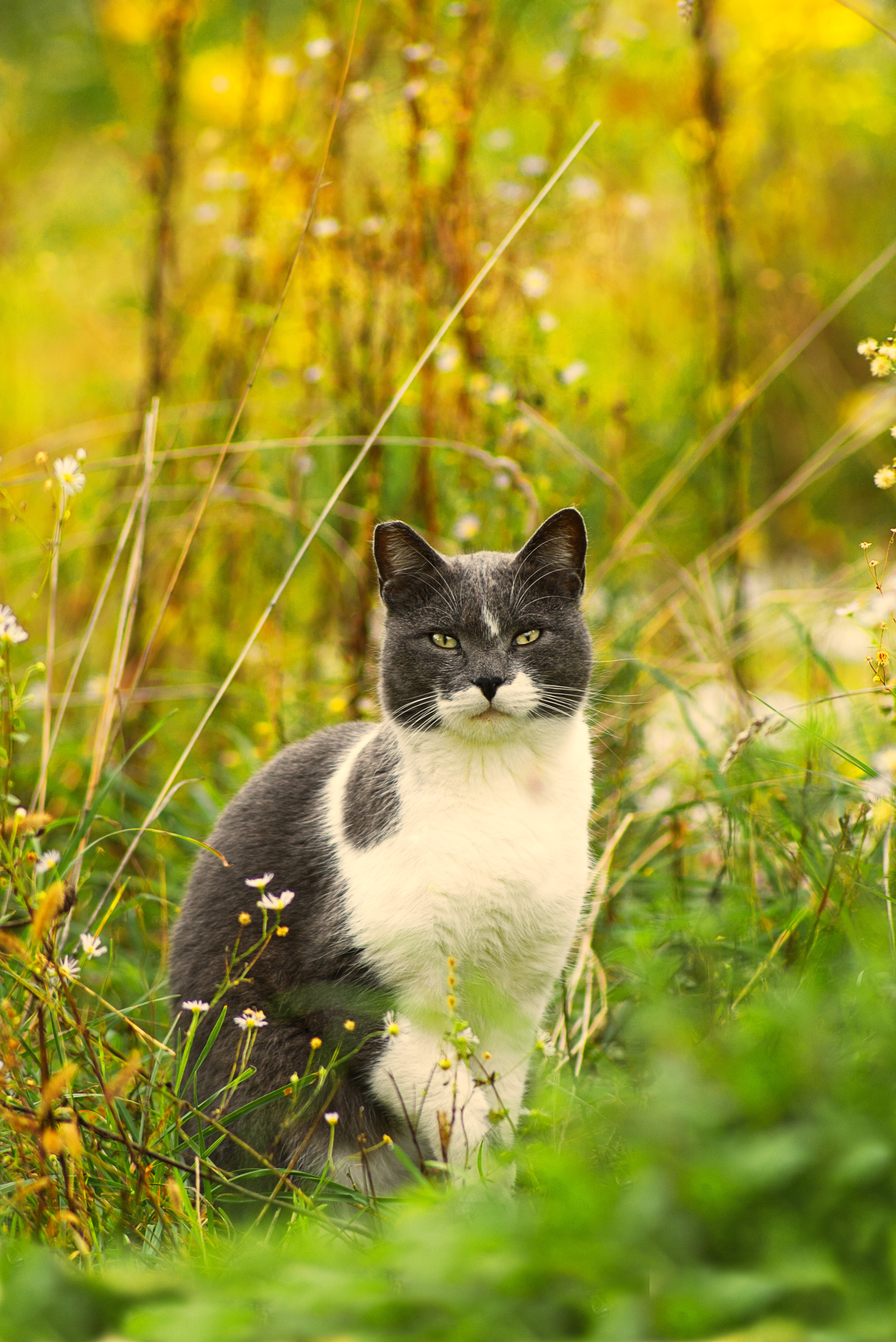 64358 download wallpaper Animals, Cat, Grass, Pet, Flowers screensavers and pictures for free