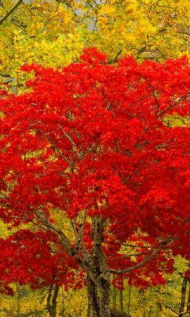 29131 скачать обои Пейзаж, Деревья, Осень - заставки и картинки бесплатно