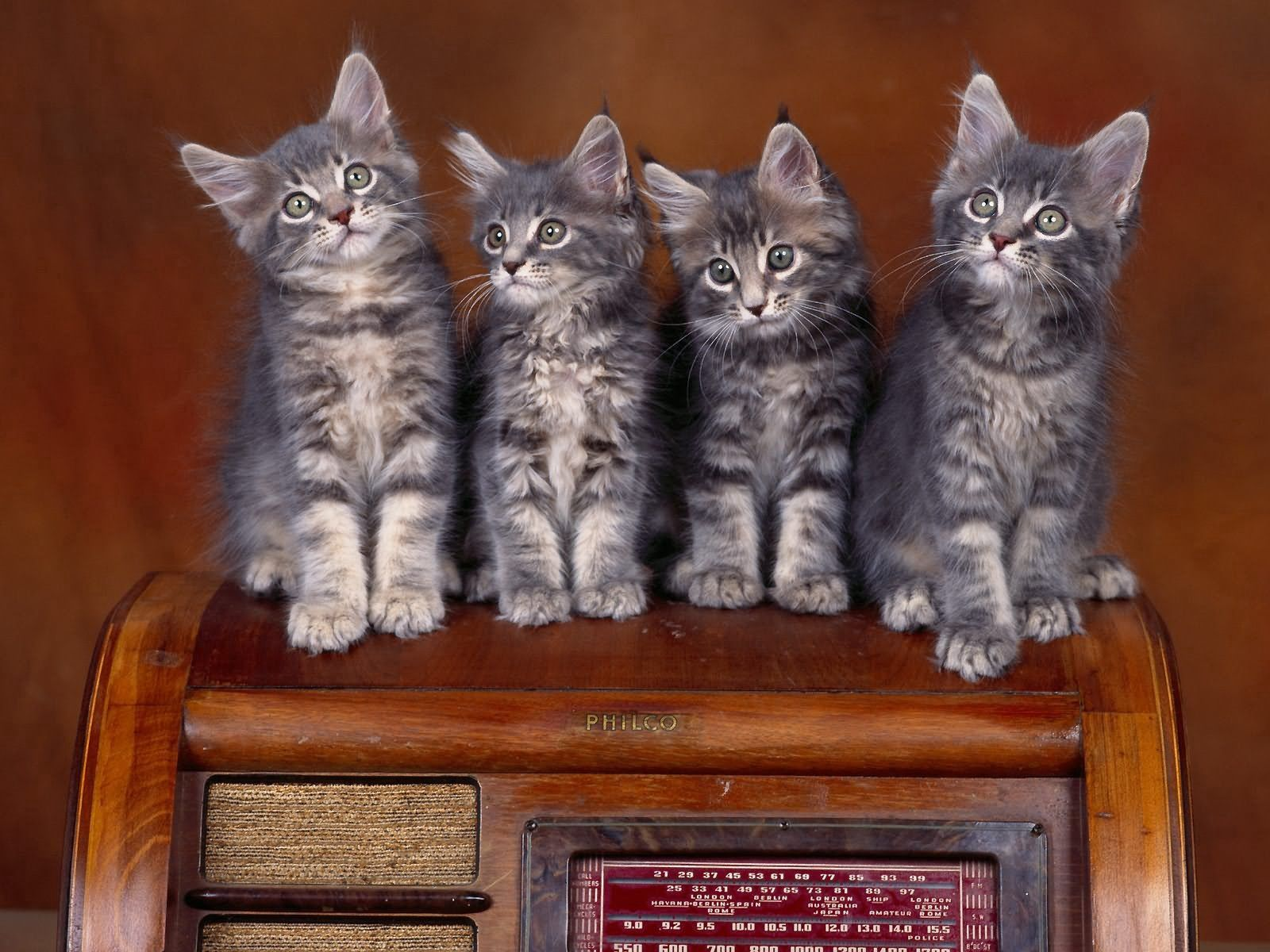 122374 Screensavers and Wallpapers Kittens for phone. Download Animals, Sit, Lot, Kittens pictures for free