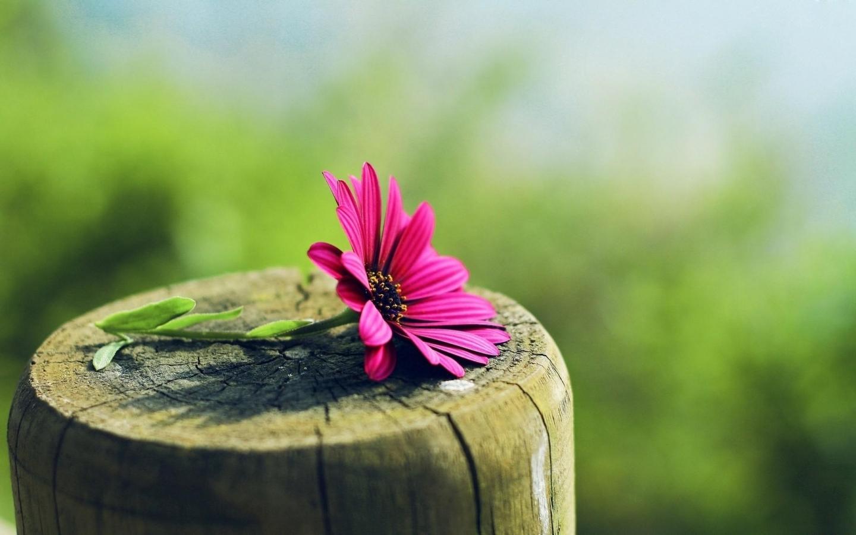 15184 descargar fondo de pantalla Plantas, Flores: protectores de pantalla e imágenes gratis