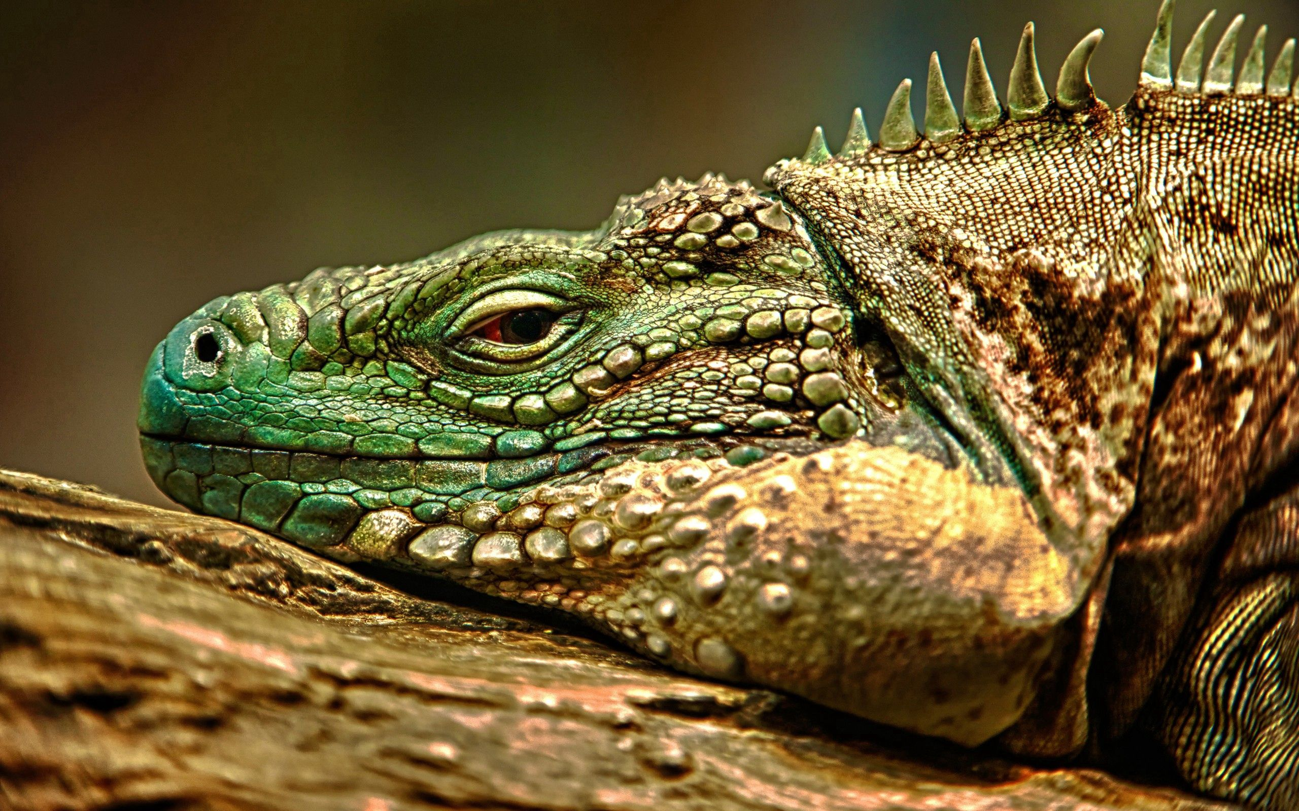105968 download wallpaper Animals, Iguana, Reptile, Muzzle, Dangerous screensavers and pictures for free