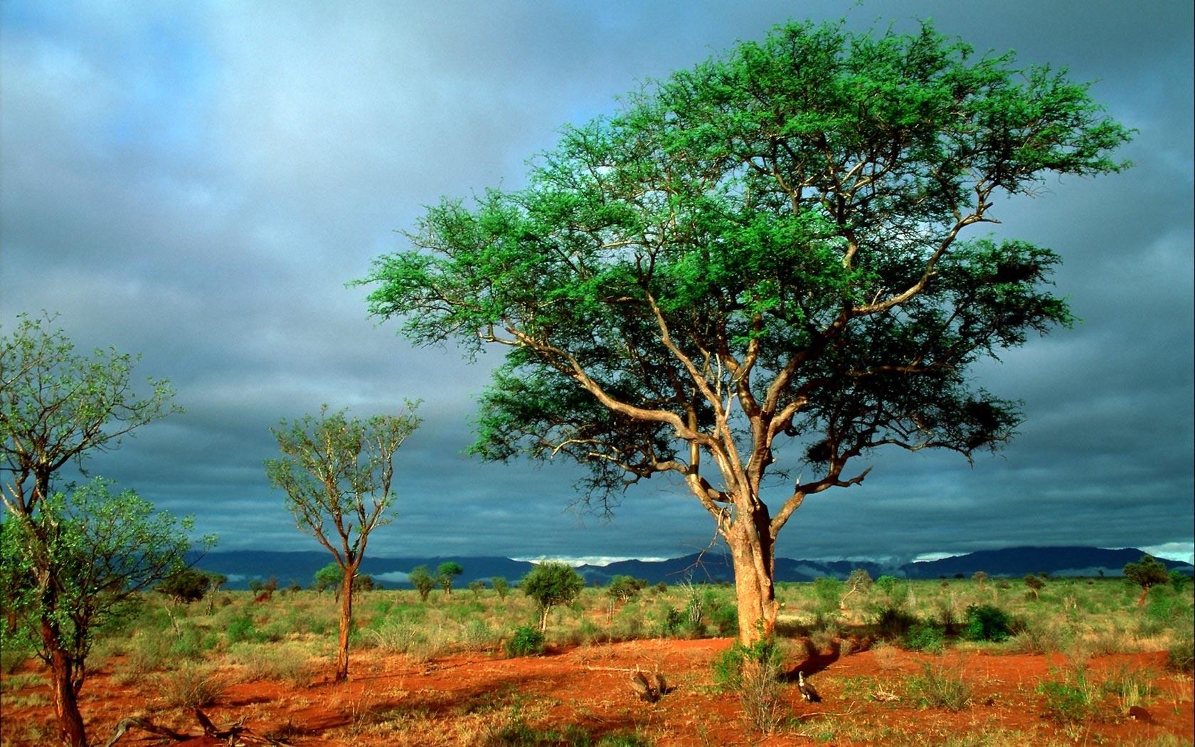 26336 скачать обои Пейзаж, Деревья, Саванна, Облака - заставки и картинки бесплатно