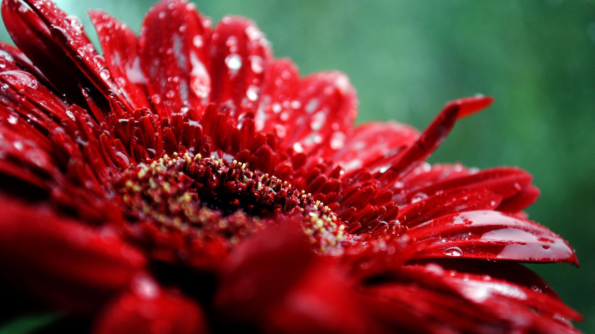 35567 скачать обои Растения, Цветы - заставки и картинки бесплатно