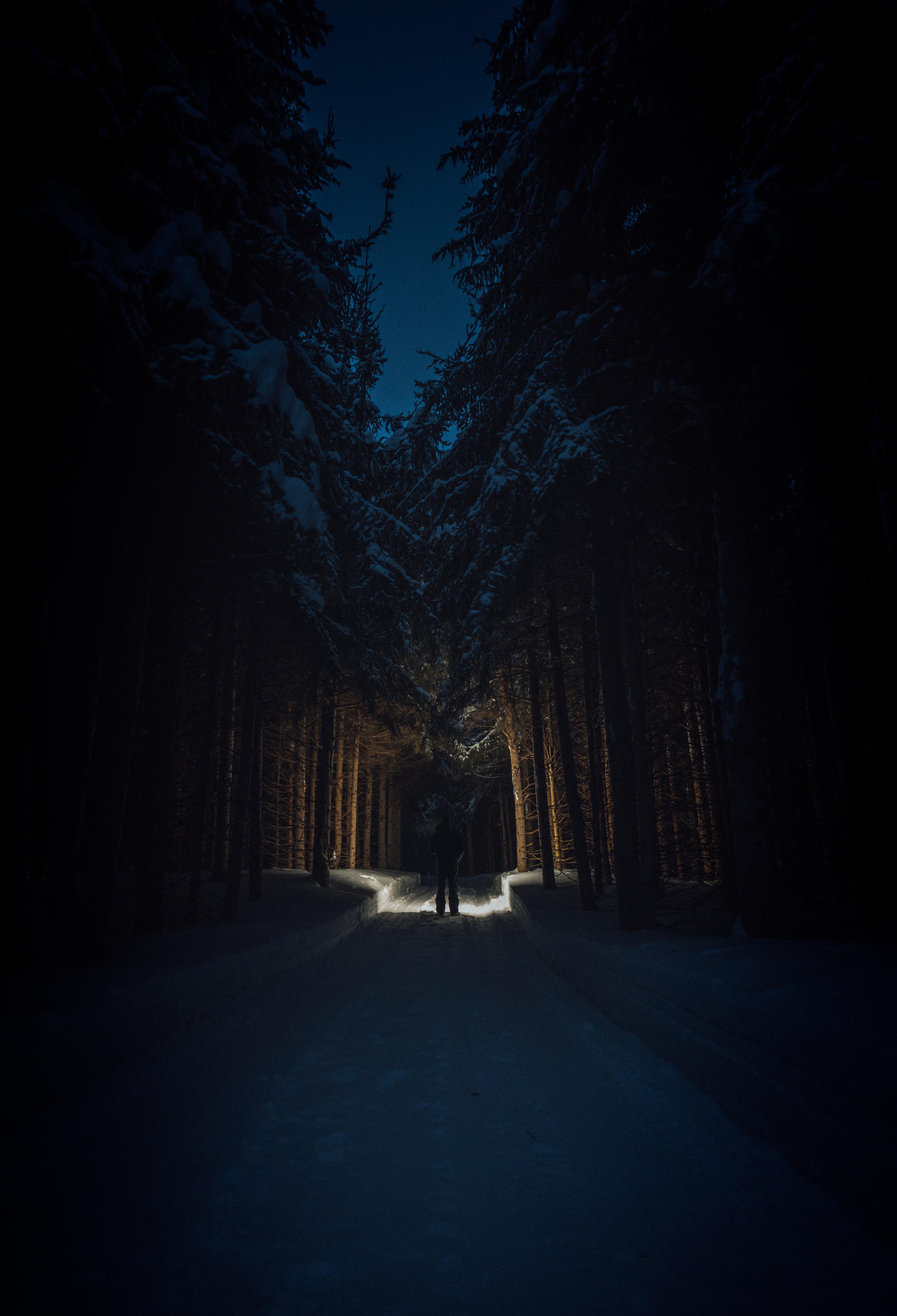 143845 скачать обои Дорога, Деревья, Снег, Темные, Силуэт, Лес - заставки и картинки бесплатно