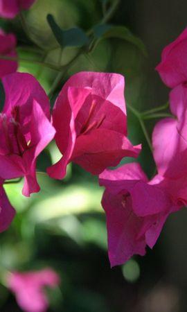 2556 скачать обои Растения, Цветы - заставки и картинки бесплатно