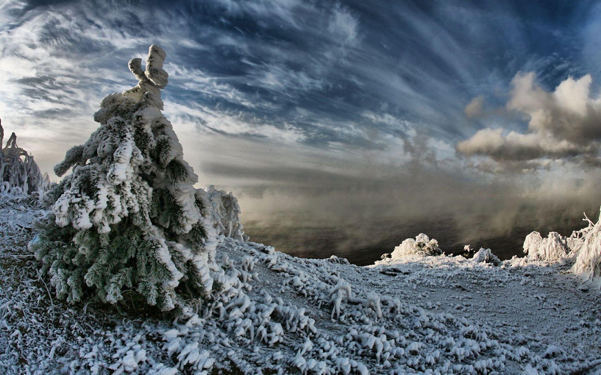 81485 скачать обои Природа, Ель, Снег, Тяжесть, Небо, Облака, Чернота, Пар, Зима - заставки и картинки бесплатно