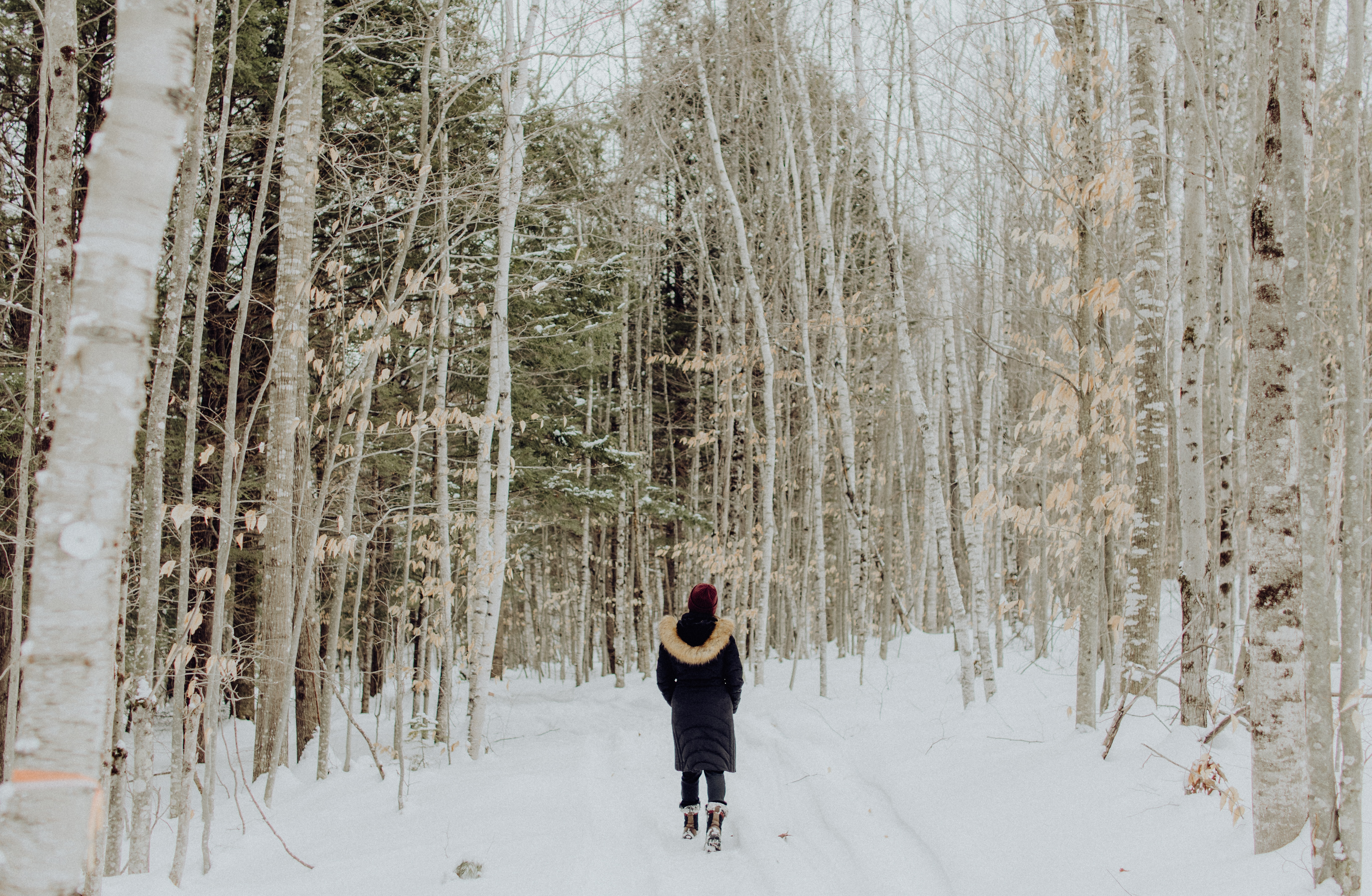 145172 download wallpaper Miscellanea, Miscellaneous, Loneliness, Forest, Snow, Winter, Garden screensavers and pictures for free