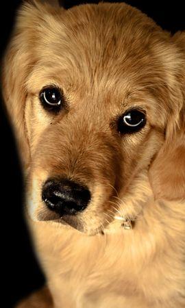 38526 baixar papel de parede Animais, Cães - protetores de tela e imagens gratuitamente