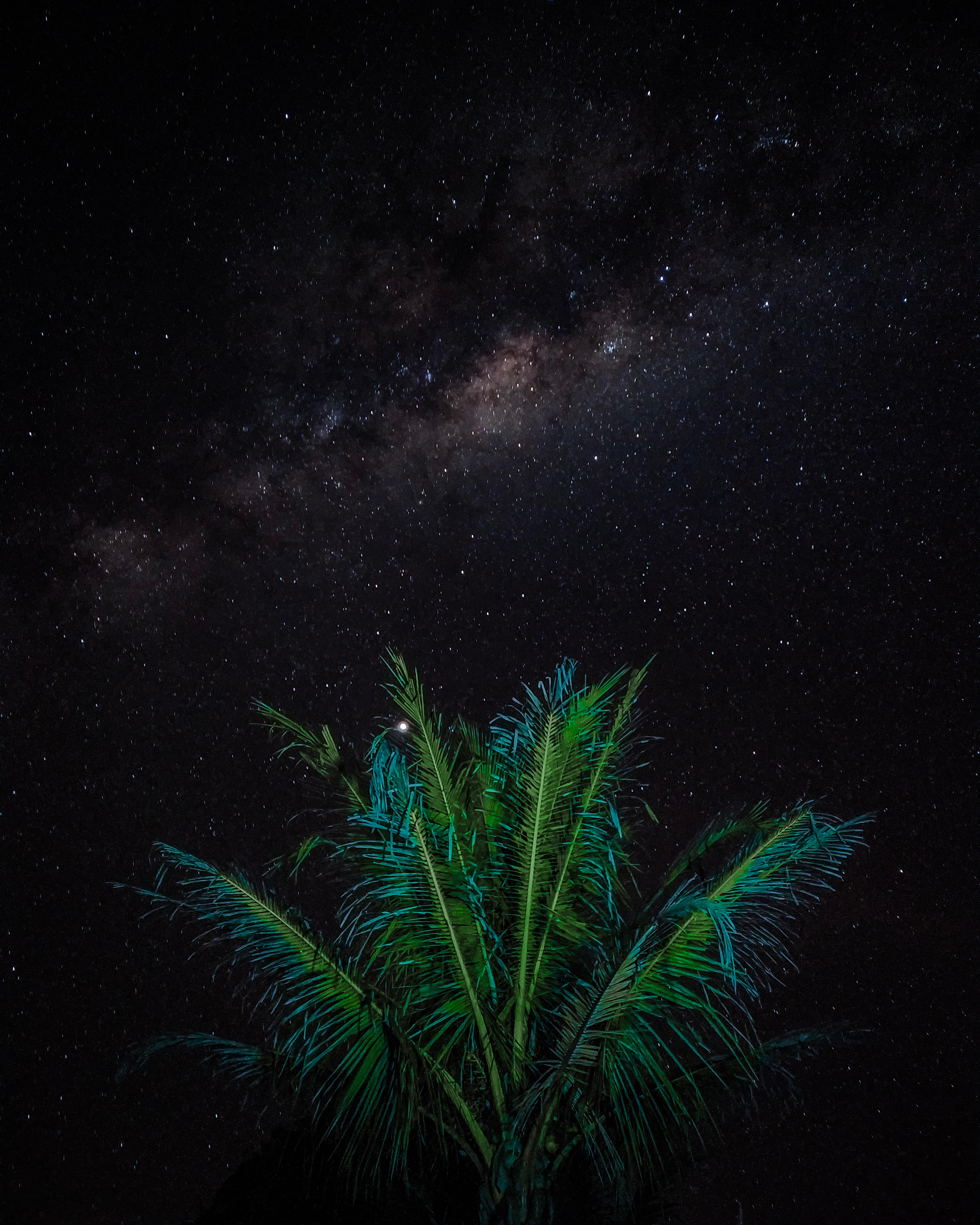 79614 Заставки и Обои Темные на телефон. Скачать Темные, Звезды, Ночь, Звездное Небо, Пальма, Ветки картинки бесплатно