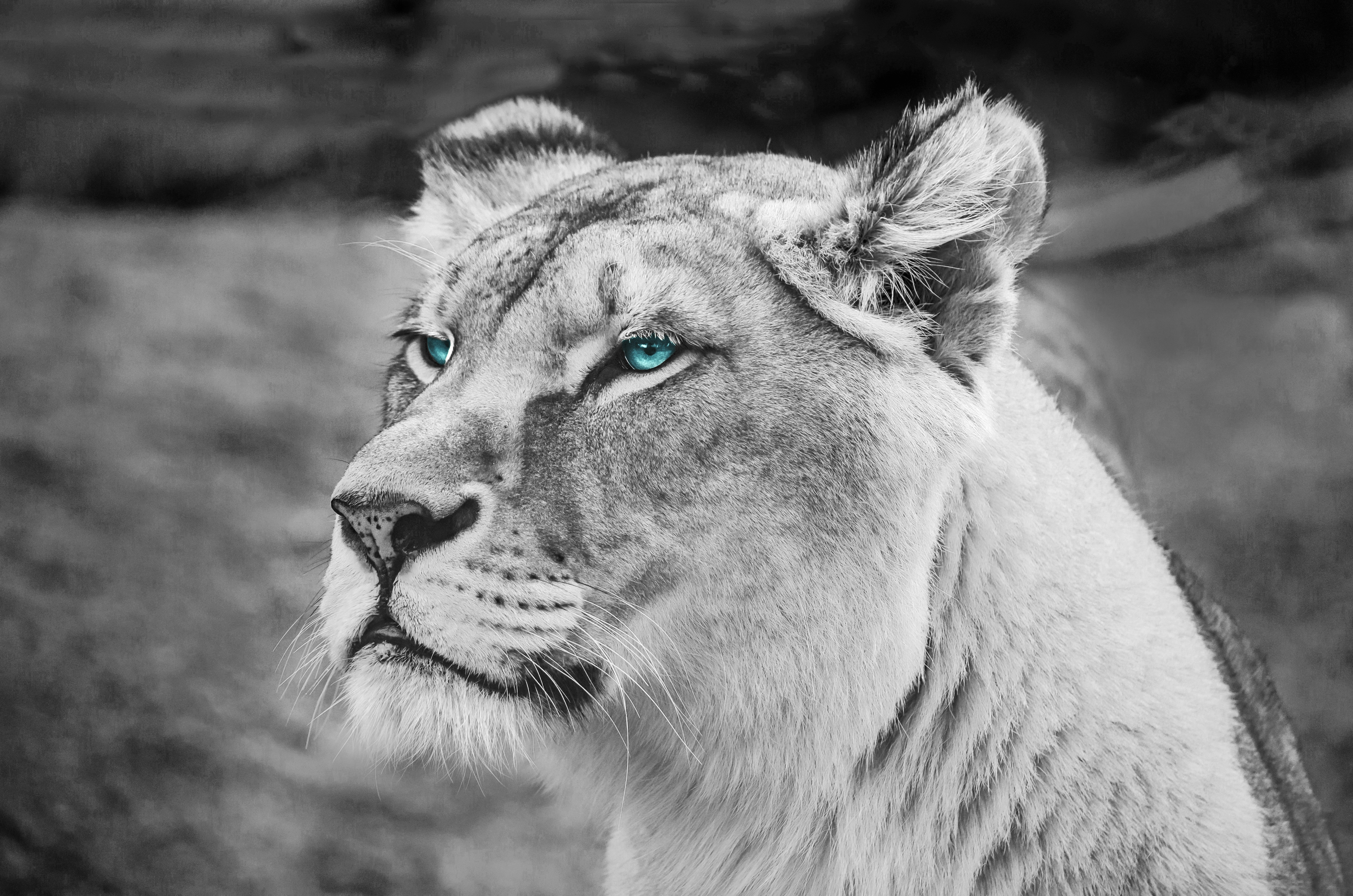 59231 download wallpaper Animals, Lioness, Muzzle, Eyes, Sight, Opinion, Wildlife, Africa screensavers and pictures for free