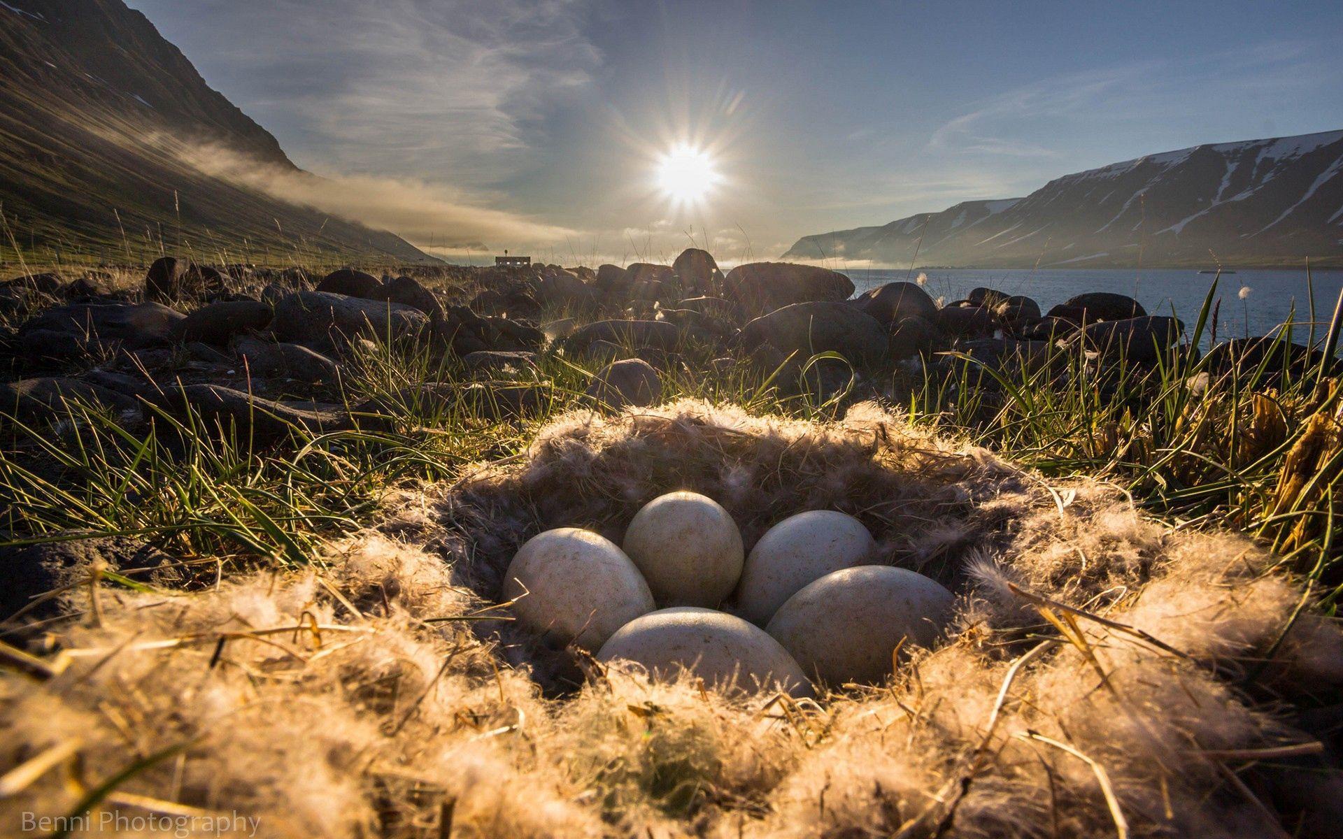 149507 Заставки и Обои Яйца на телефон. Скачать Природа, Трава, Яйца, Свет, Гнездо картинки бесплатно