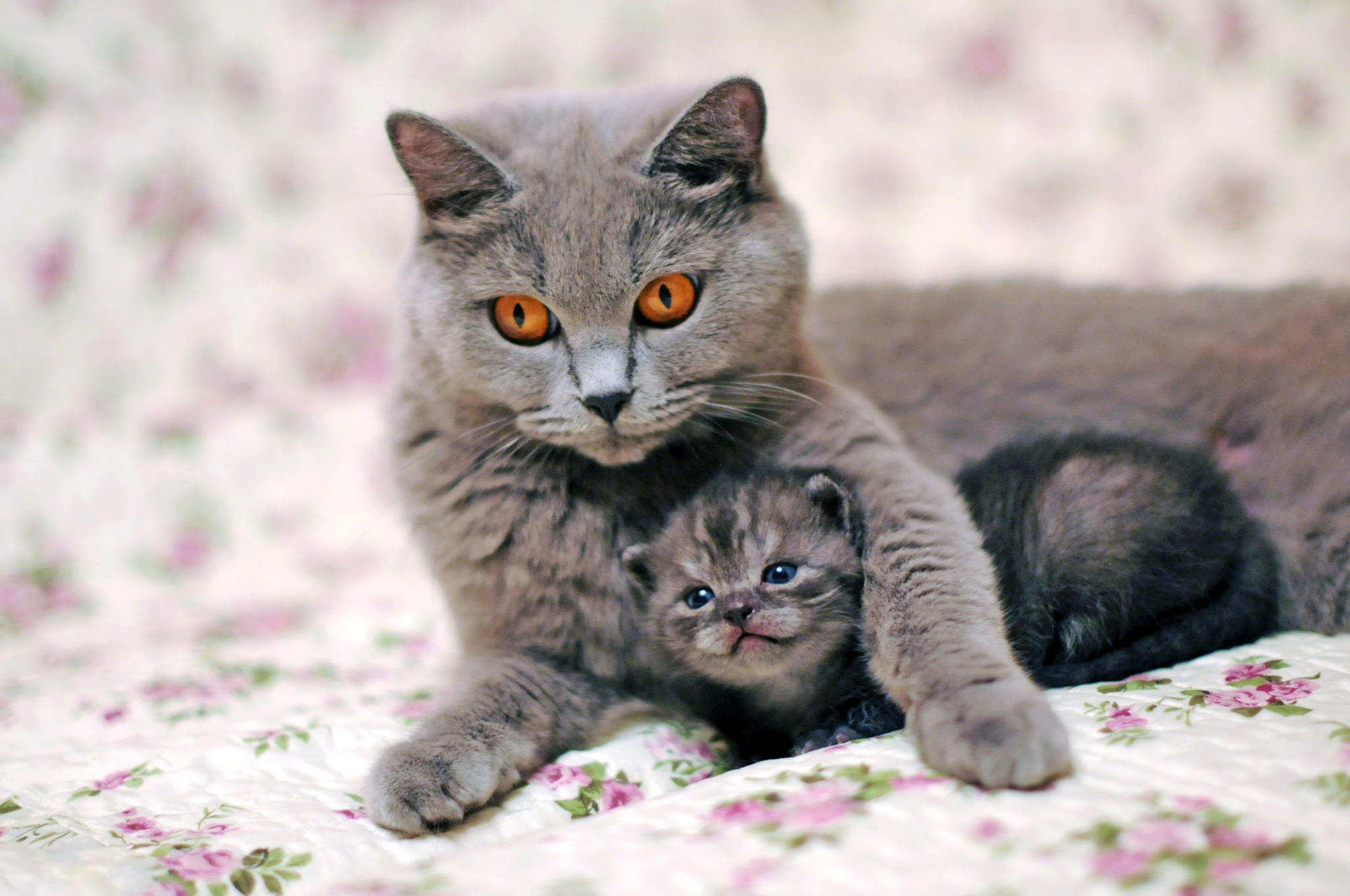 137918 Screensavers and Wallpapers Kitten for phone. Download Kitty, Animals, Cat, Kitten, Care, Tenderness pictures for free