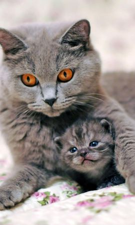 137918 download wallpaper Animals, Cat, Kitty, Kitten, Care, Tenderness screensavers and pictures for free