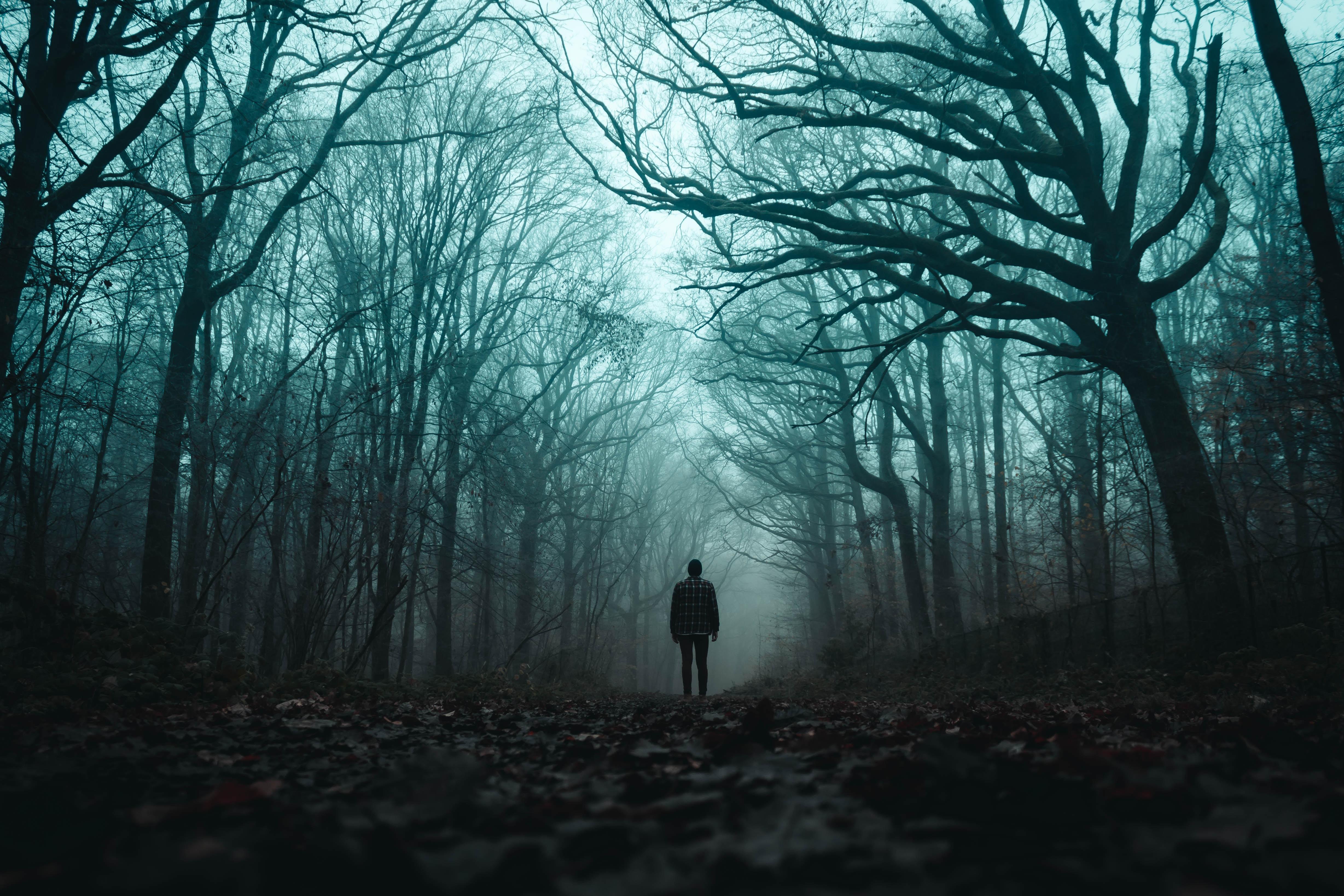 67493 Заставки и Обои Разное на телефон. Скачать Разное, Одиночество, Силуэт, Лес, Туман, Мрачный картинки бесплатно