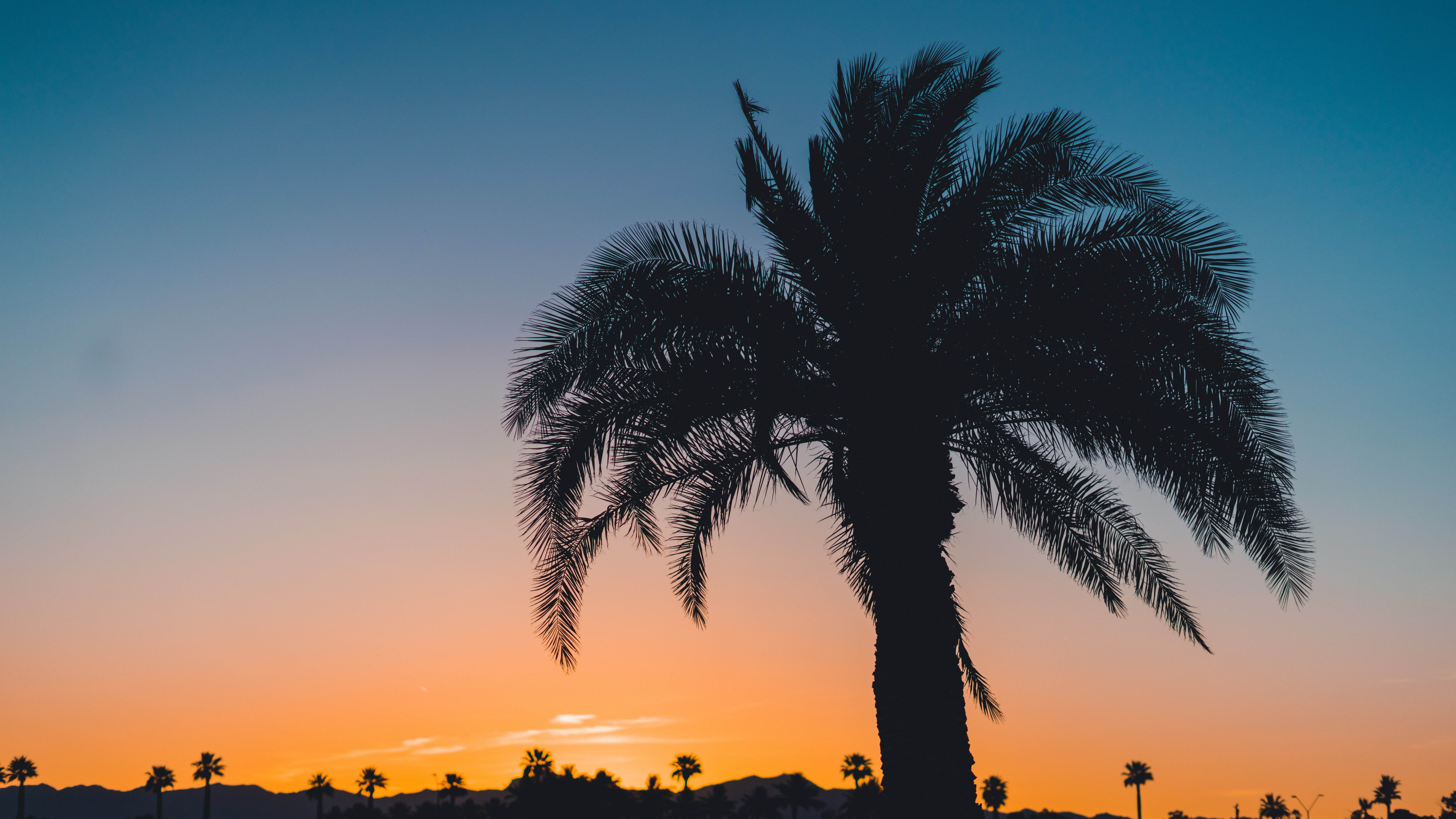 127928 download wallpaper Nature, Palm, Sunset, Leaves, Branches, Sky, Tropics screensavers and pictures for free