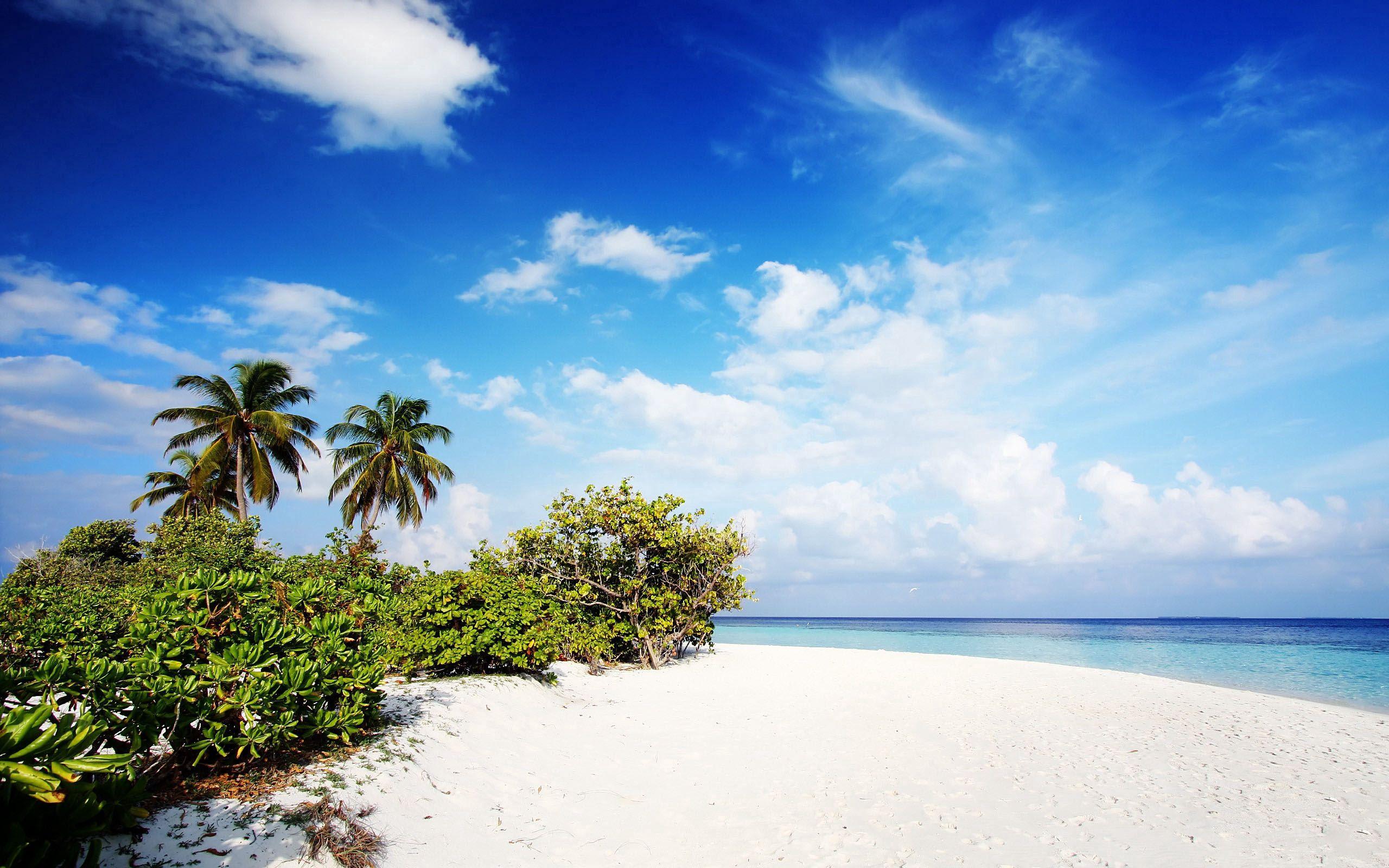 66507 Заставки и Обои Песок на телефон. Скачать Пальмы, Природа, Пляж, Песок, Мальдивы картинки бесплатно