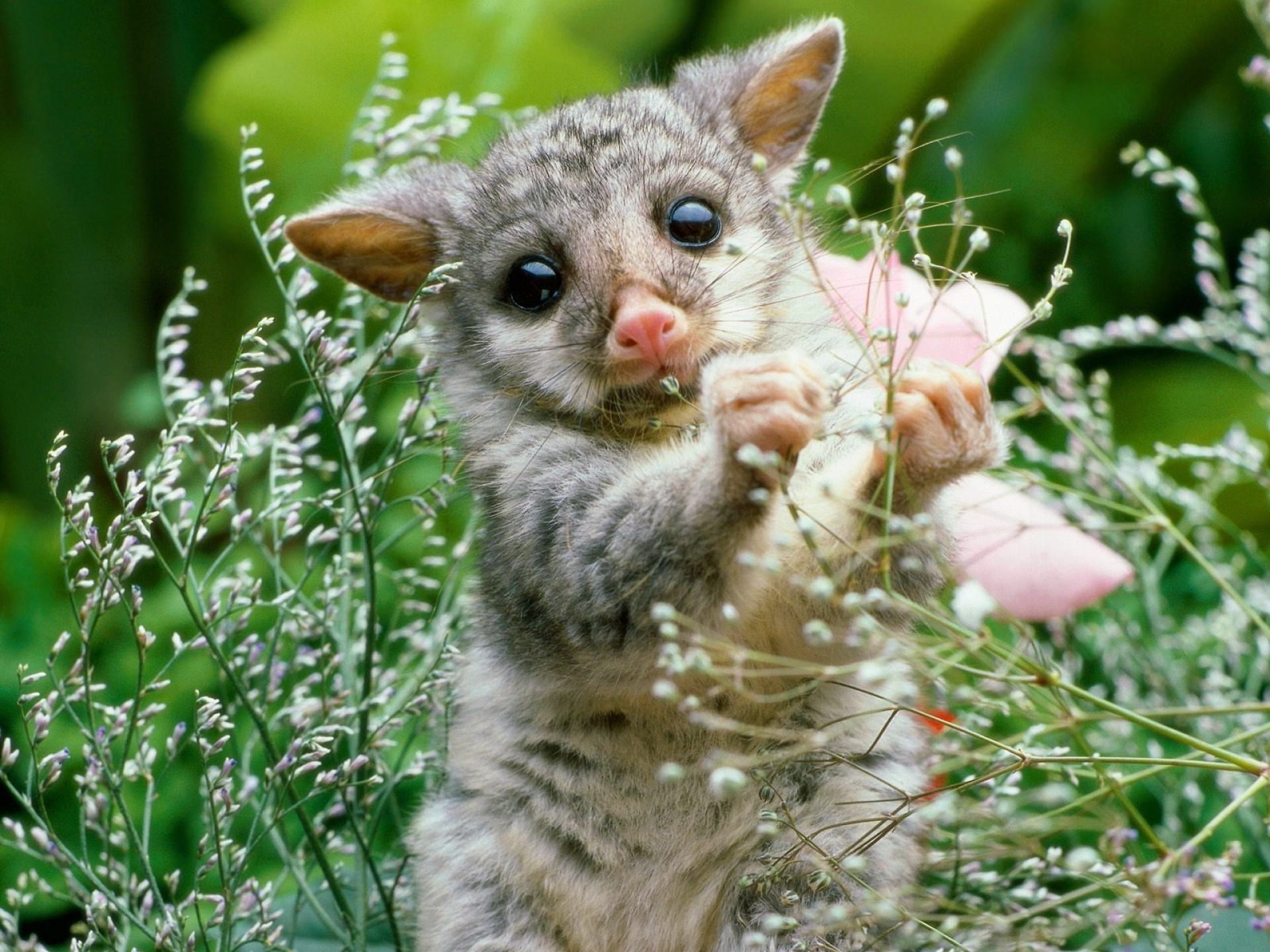 99912 Screensavers and Wallpapers Animal for phone. Download Animals, Opossum, Grass, Animal, Flowers pictures for free